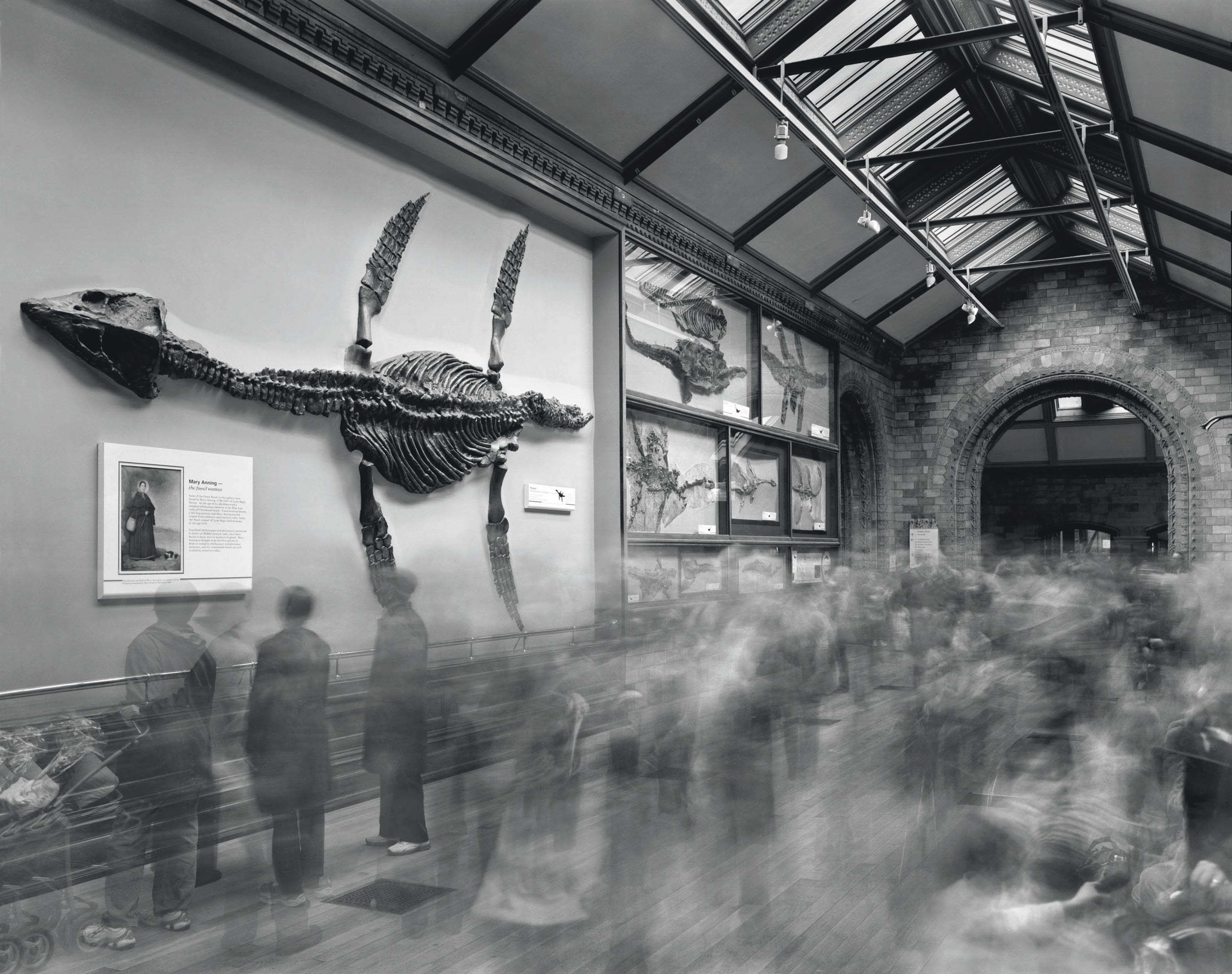 Fossils, Natural History Museum, 2007