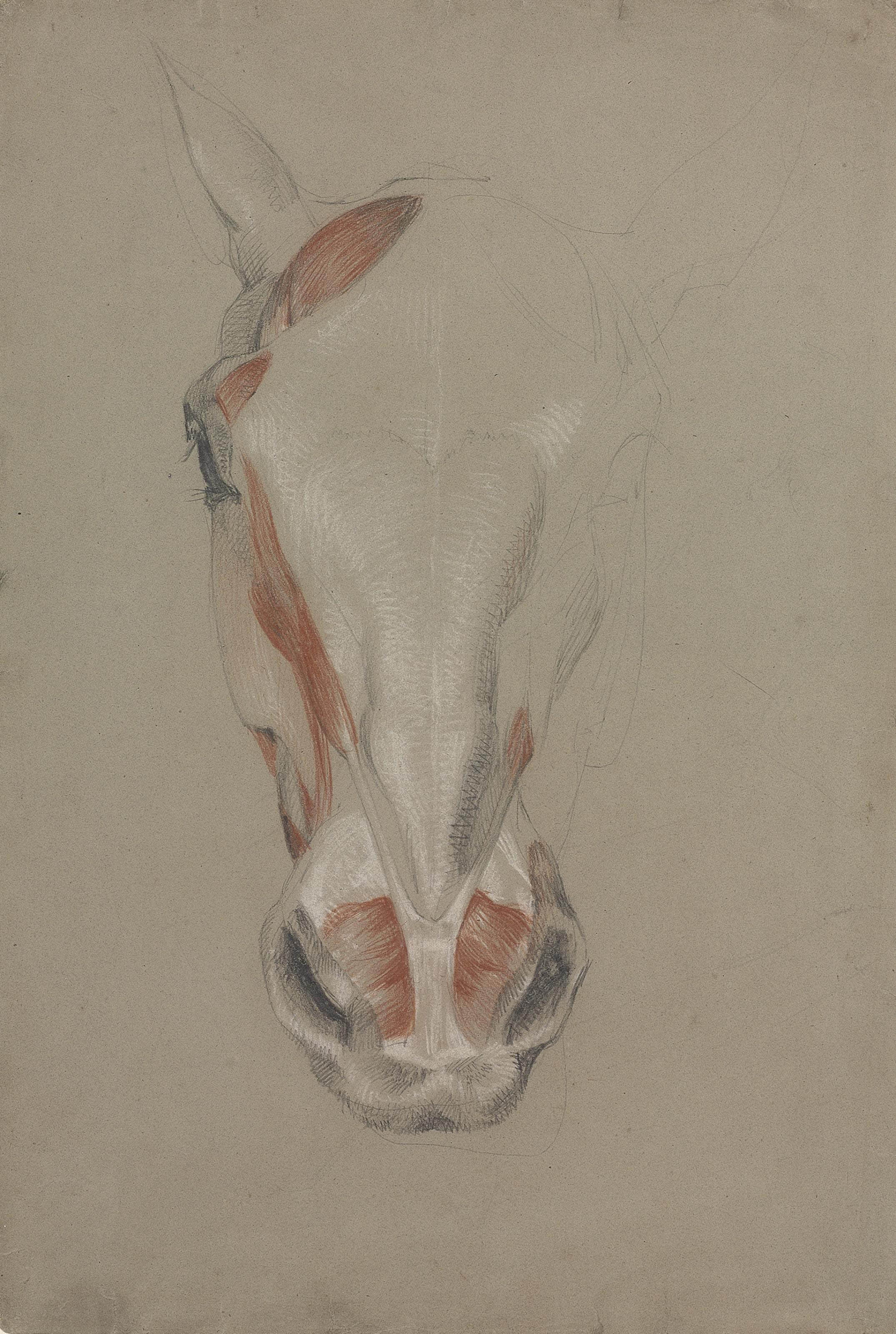 The hind quarters of an écorché dog; Three studies of the hind leg of an écorché god; A partly dissected head of a horse, seen from the front; and An écorché dog