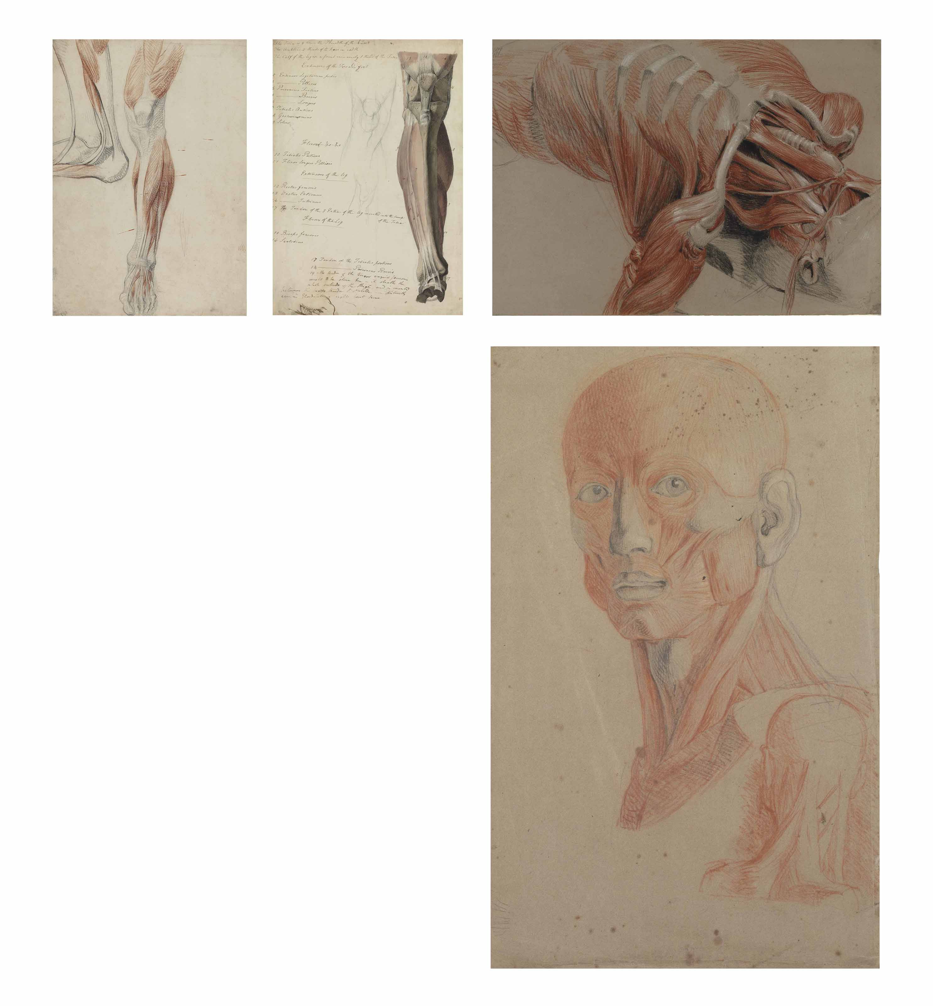 A group of fourteen écorché human figure studies including: Studies of the bones and tendons of a leg and foot, after Haydon; Two studies of an écorché head and neck after Haydon; A cast of an écorché foot, seen from the side; Studies of an arm, hand and head (recto) and a study of a male nude by Haydon (verso); Two views of an écorché head, from a cast by Bouchardon; A study of the muscles of a ribcage; Two views of an écorché leg (illustrated); The upper body of an écorché figure (illustrated); A dissected foot, showing the bones, muscles and tendons; The muscles of the upper arm, shoulder and part of the ribcage, from a dissected figure; Six studies of an arm, after Haydon; The muscles of a right arm (after Haydon, after Albinus?) (illustrated); and A leg from knee to ankle, after Haydon (illustrated)