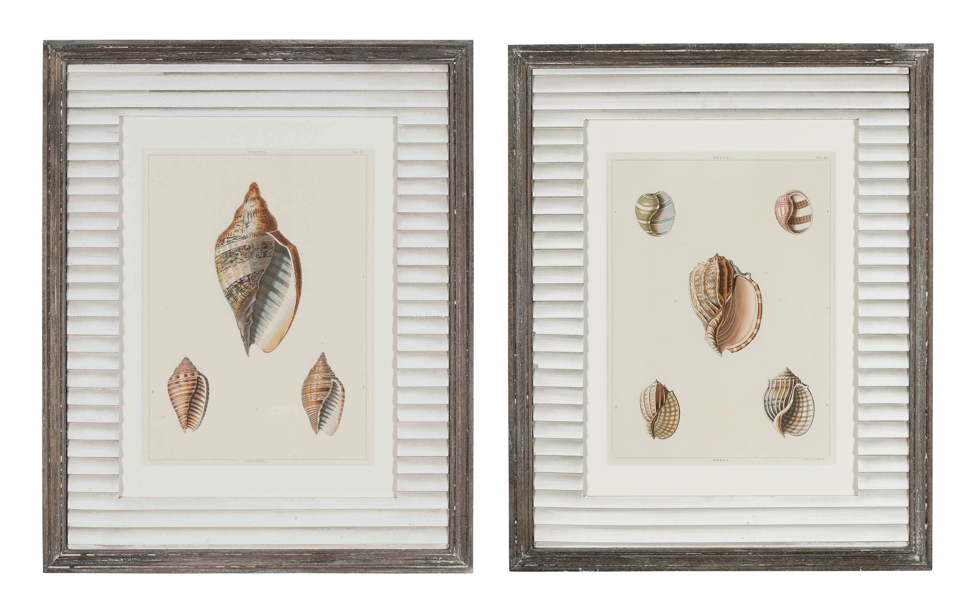 FOURTEEN COLOURED ENGRAVINGS FROM 'CONCHOLOGY, OR THE NATURAL HISTORY OF SHELLS'