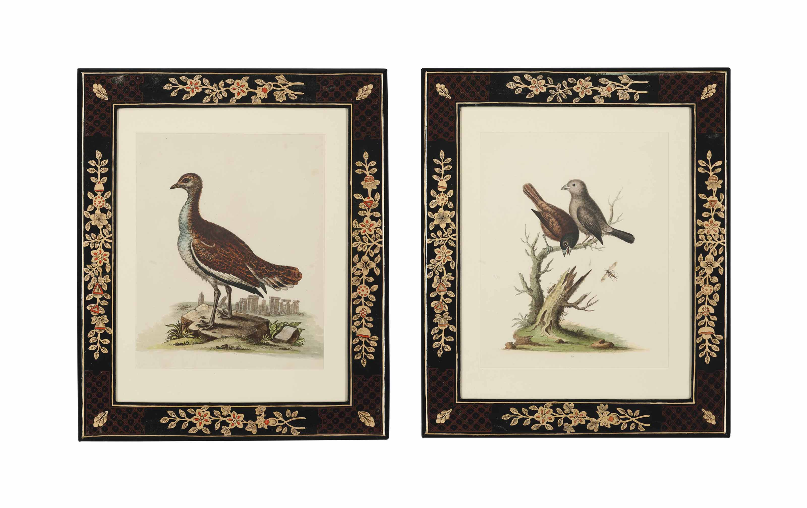 Twelve Ornithological Studies, from A Natural History of Uncommon Birds