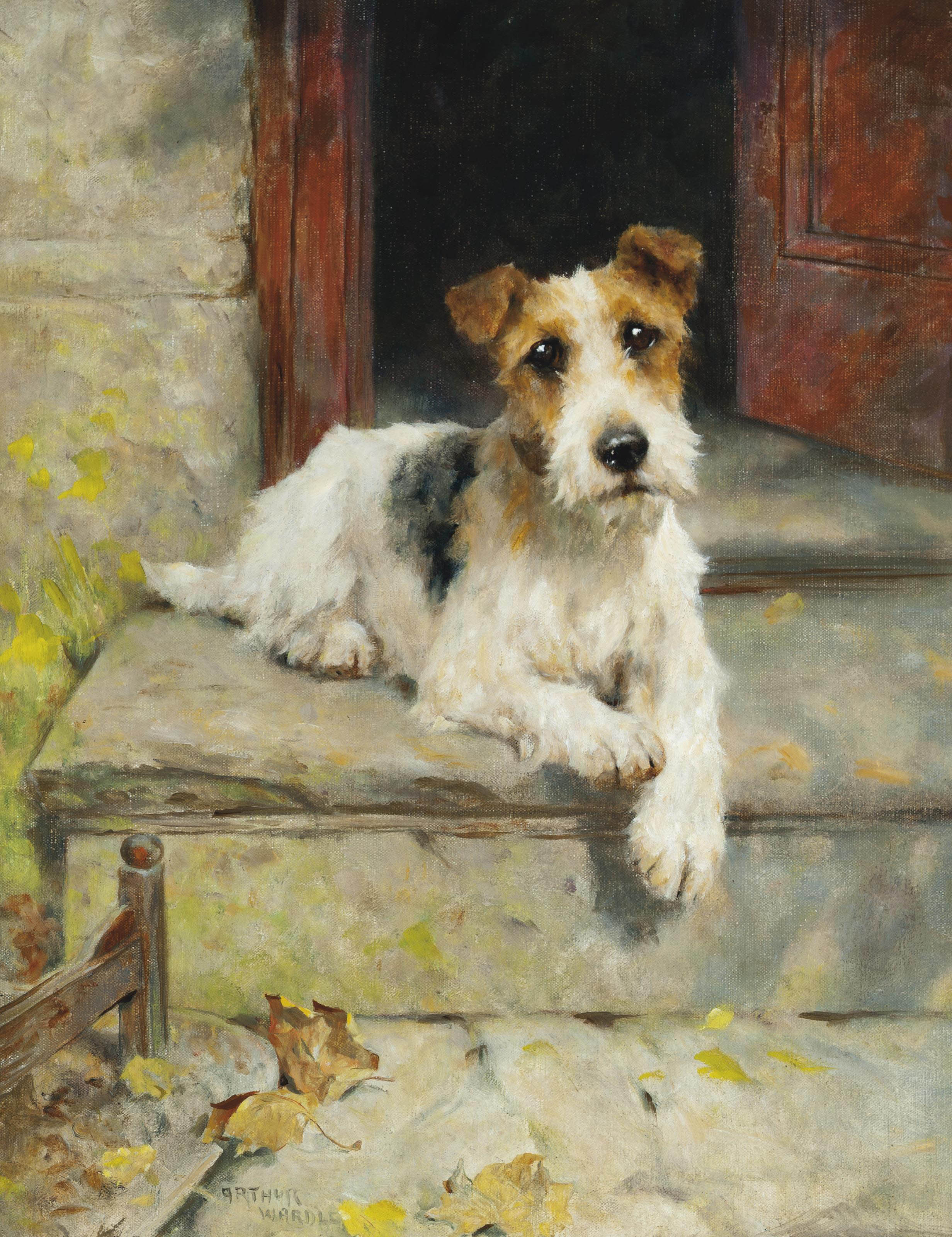 Waiting for master, a wire coated fox terrier