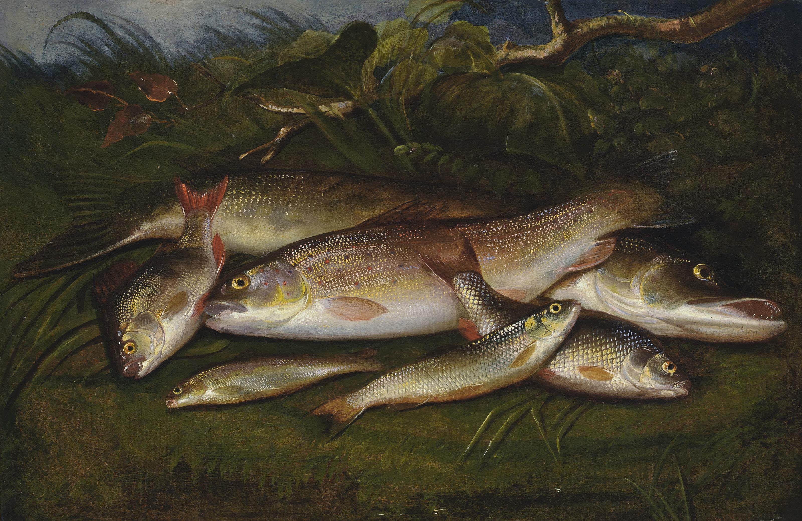 Trout, pike, roach, dace and gudgeon on a riverbank