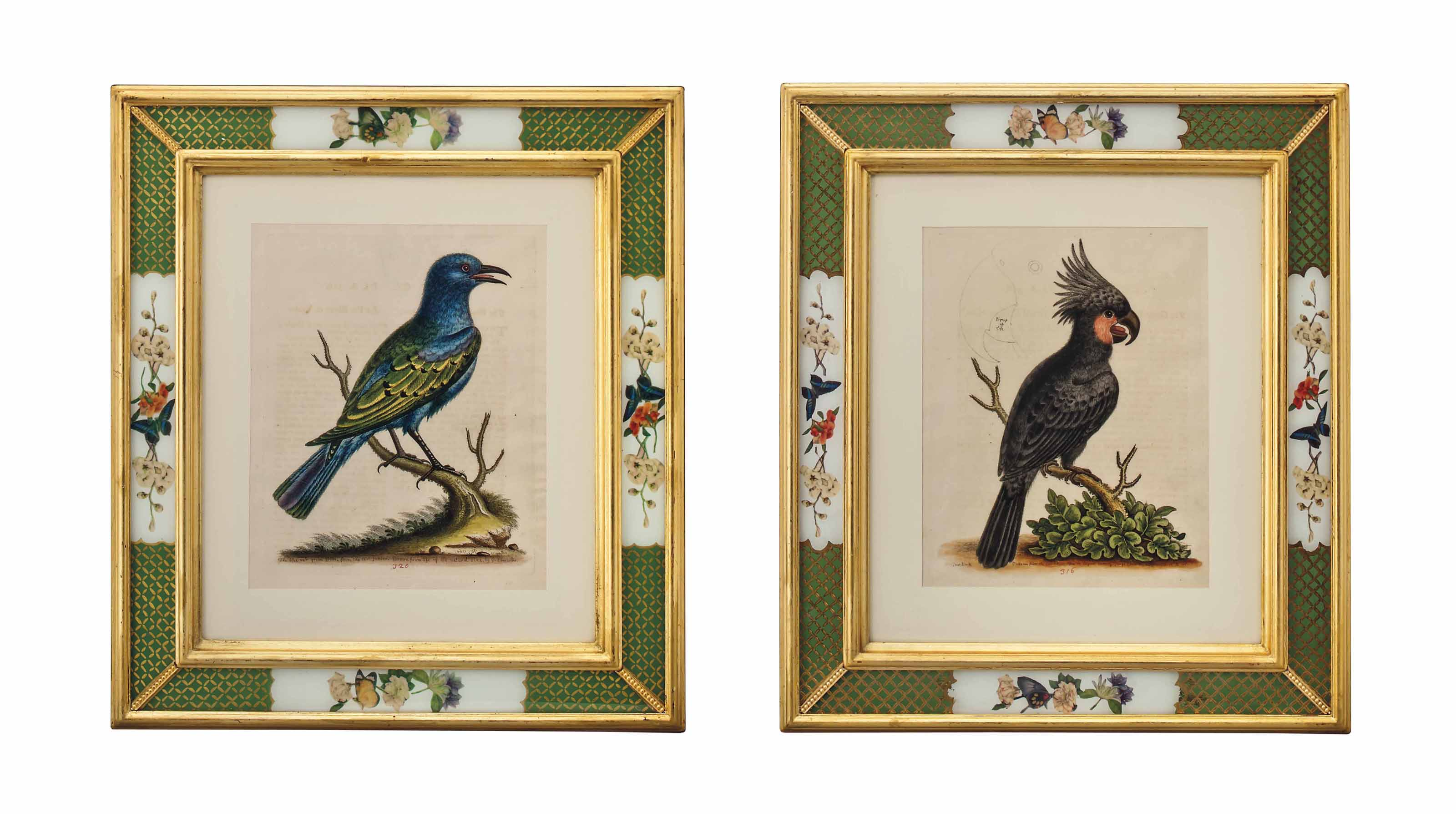 TEN HAND-COLOURED ETCHINGS FROM 'A NATURAL HISTORY OF UNCOMMON BIRDS'