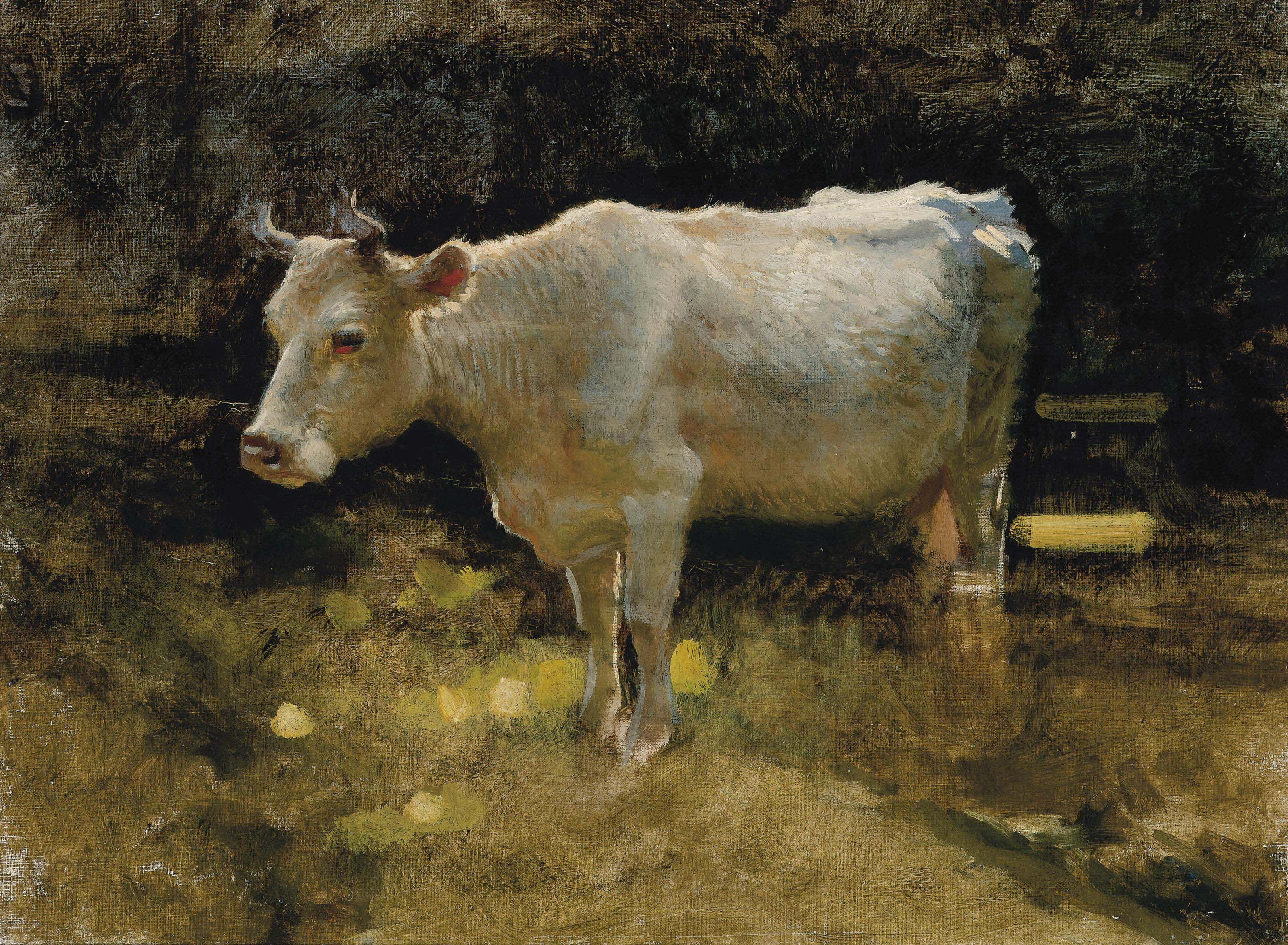 Study of a cow in a meadow