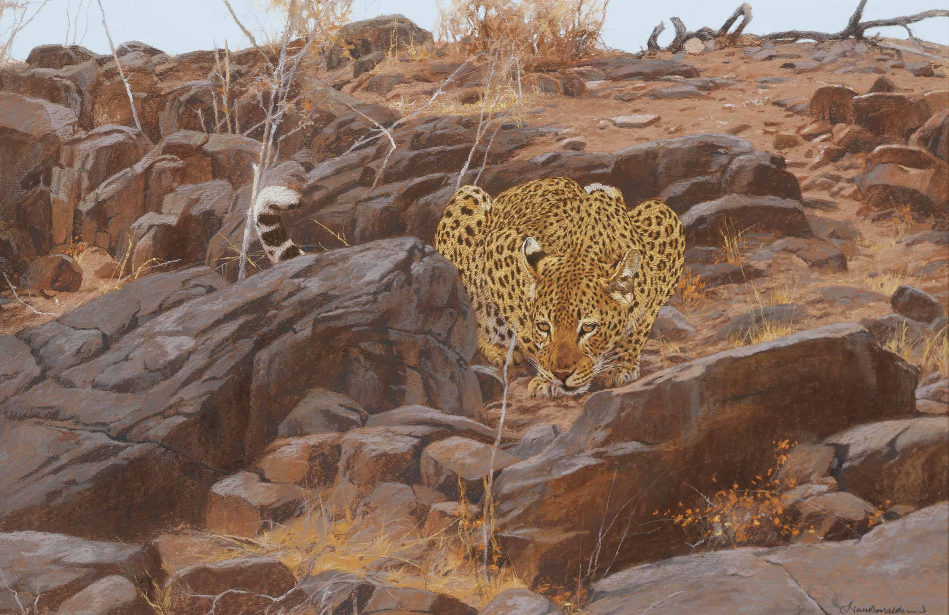 A leopard surveying his territory