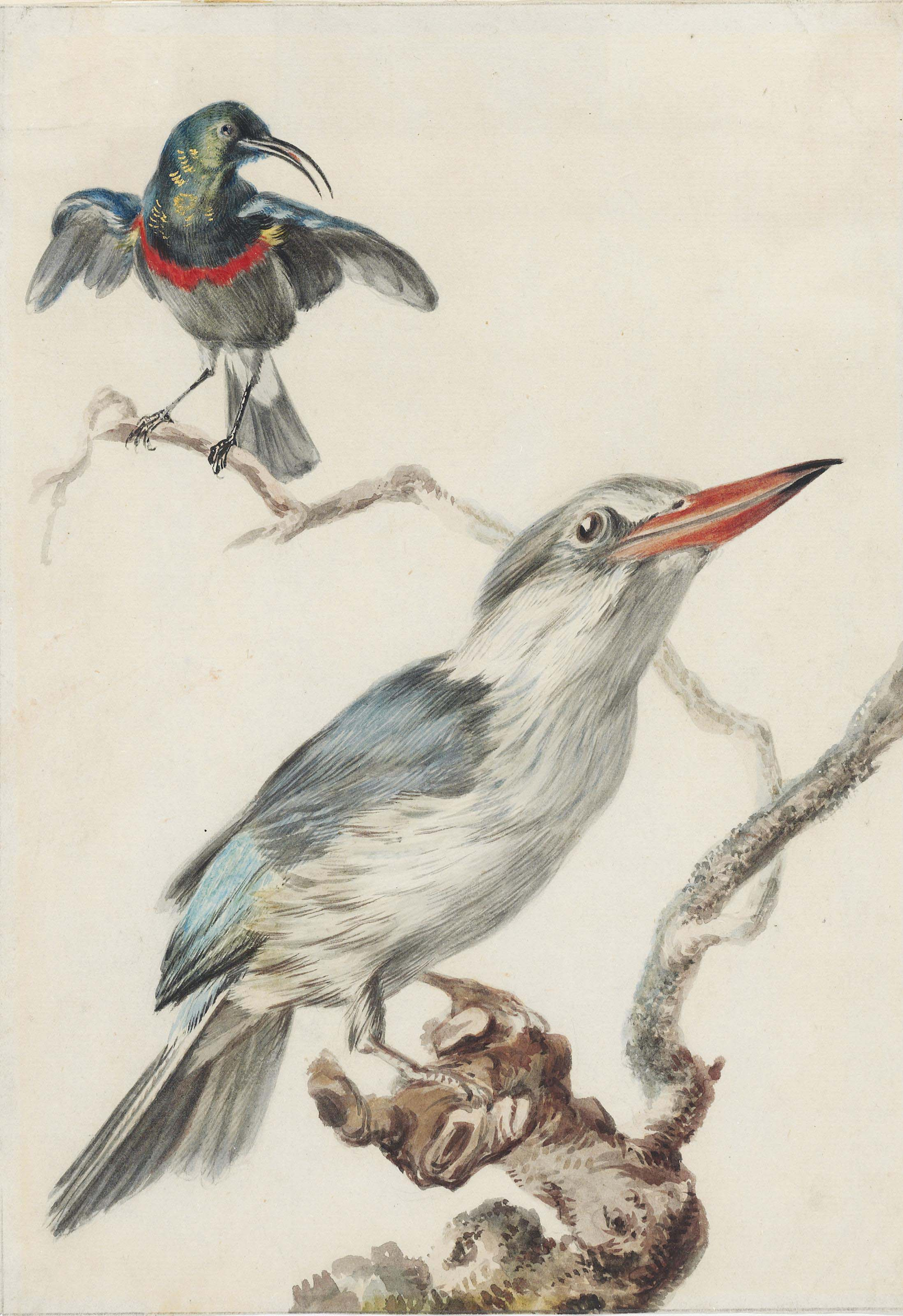A kingfisher and a sunbird