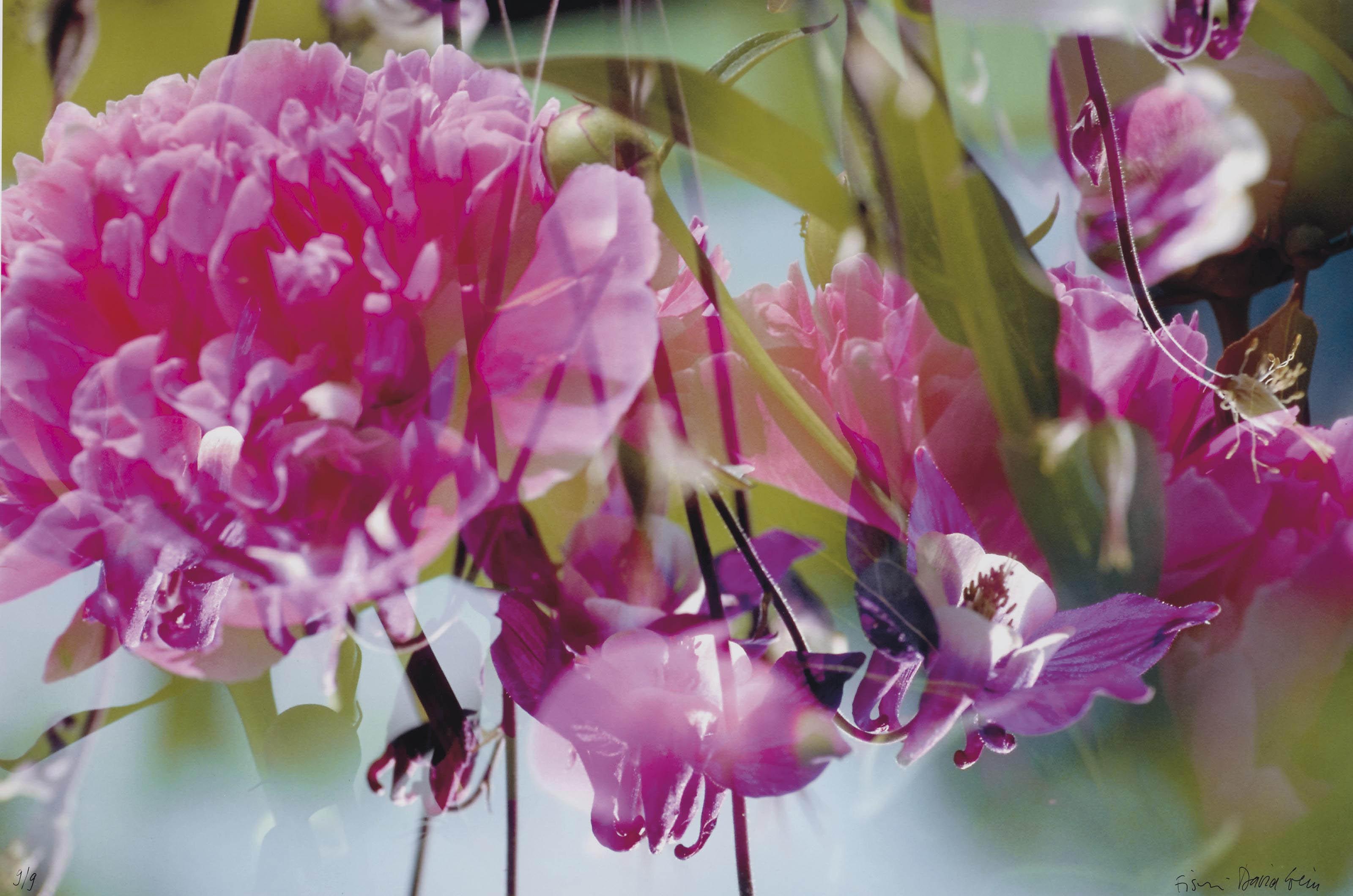 Ohne Titel (Blumen), 1998