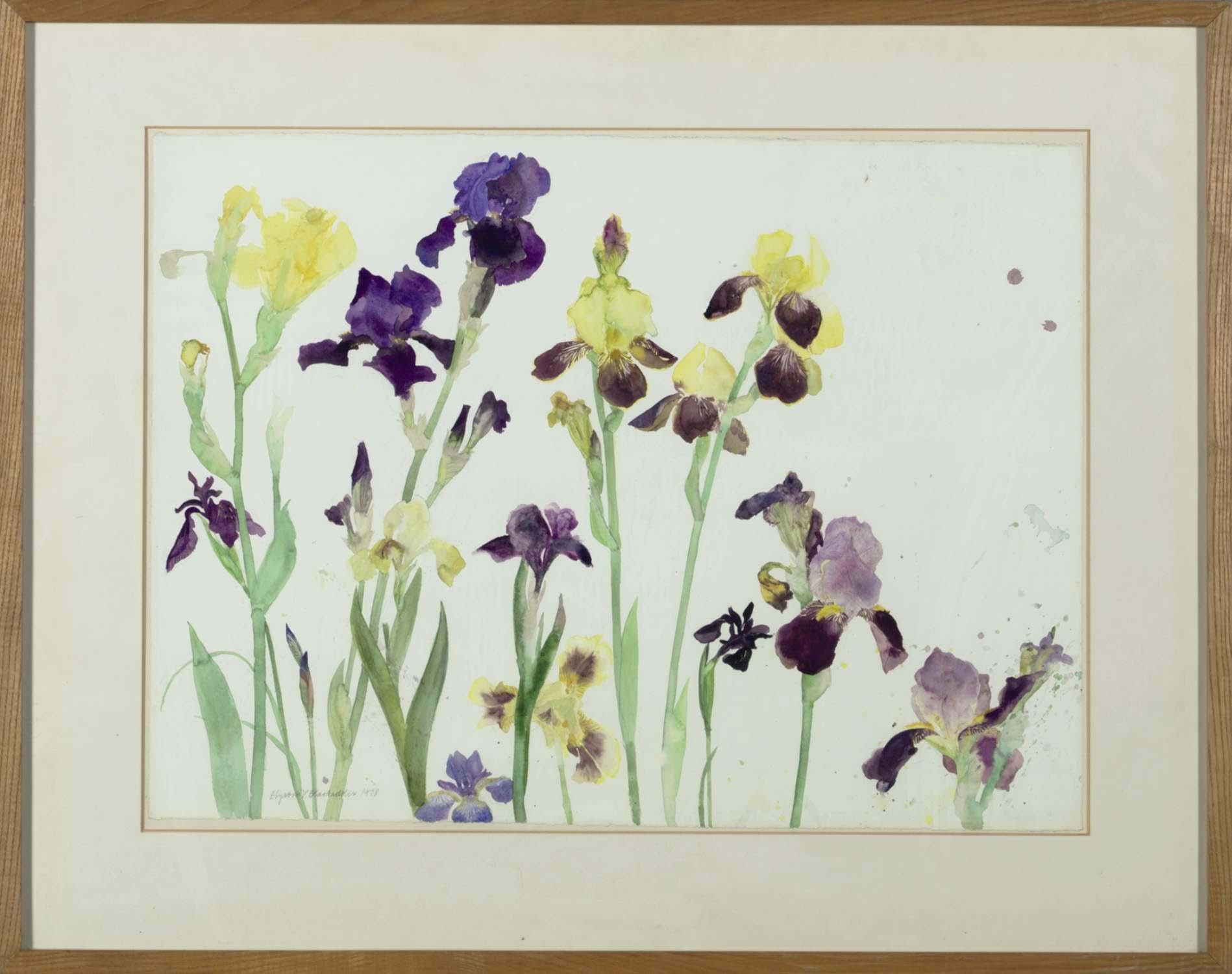 Bearded Irises, Yellow and Purple