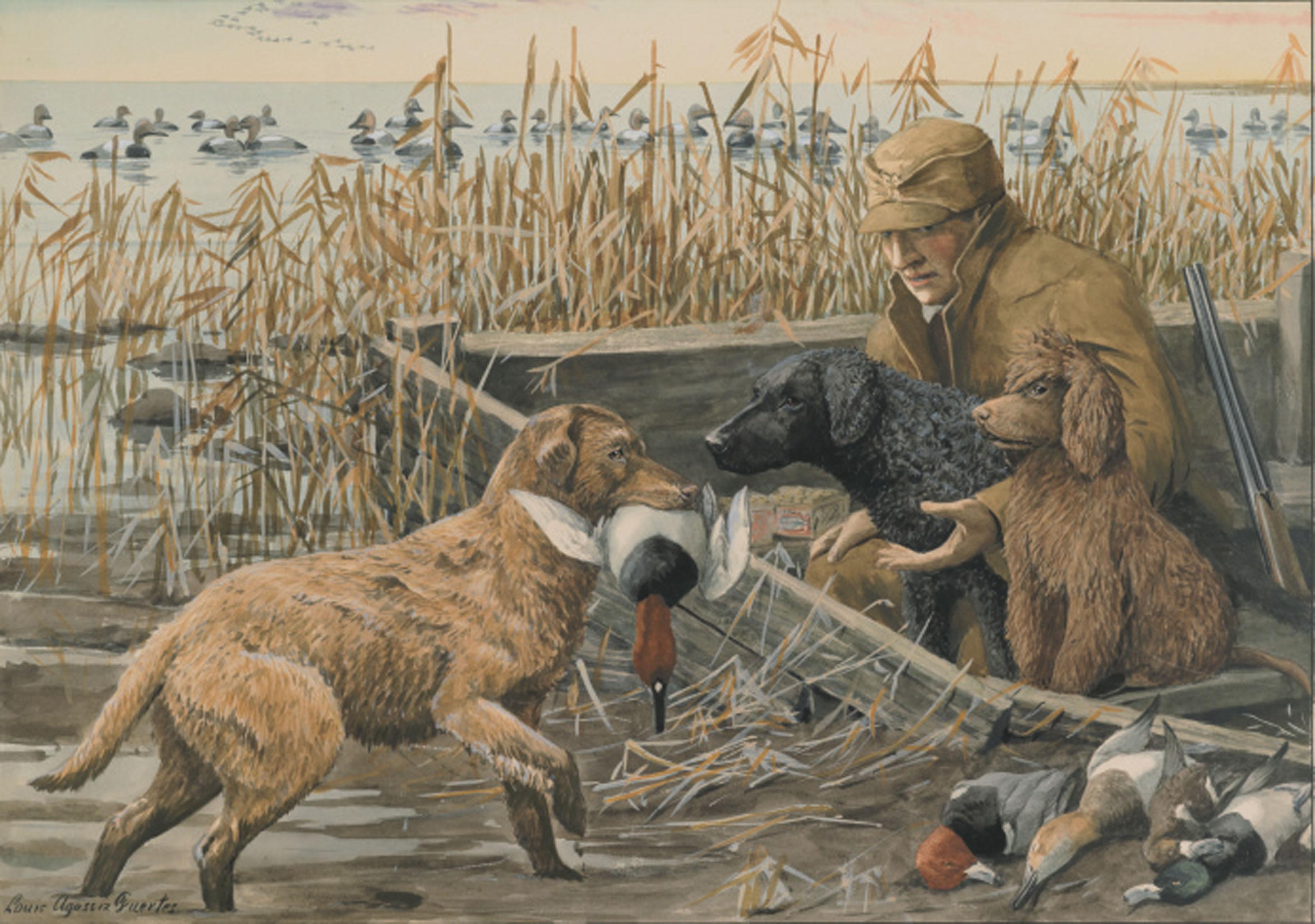 A Retriever Brings a Shot Duck Back to a Hunter