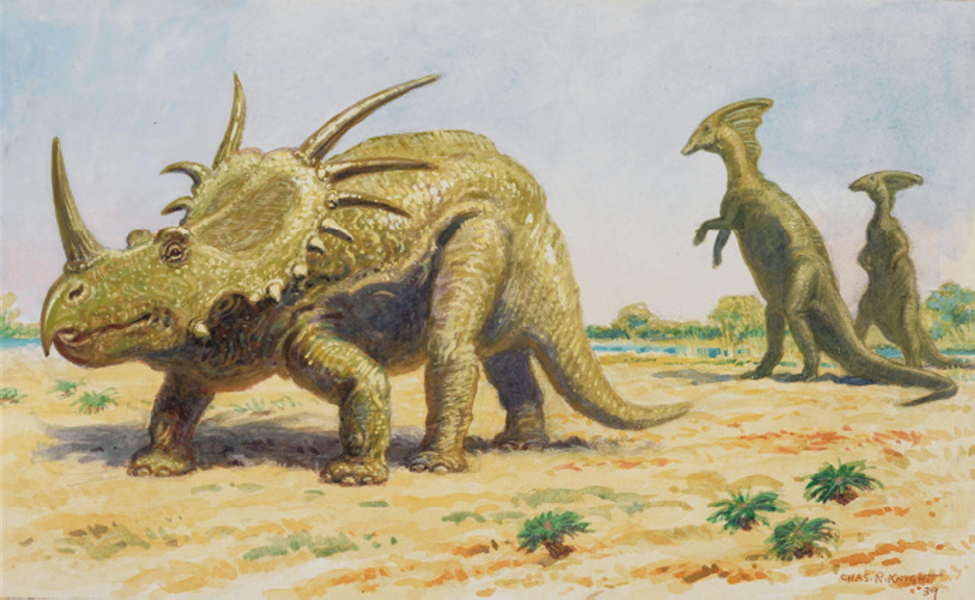Styracosaurus and Parasaurolohus