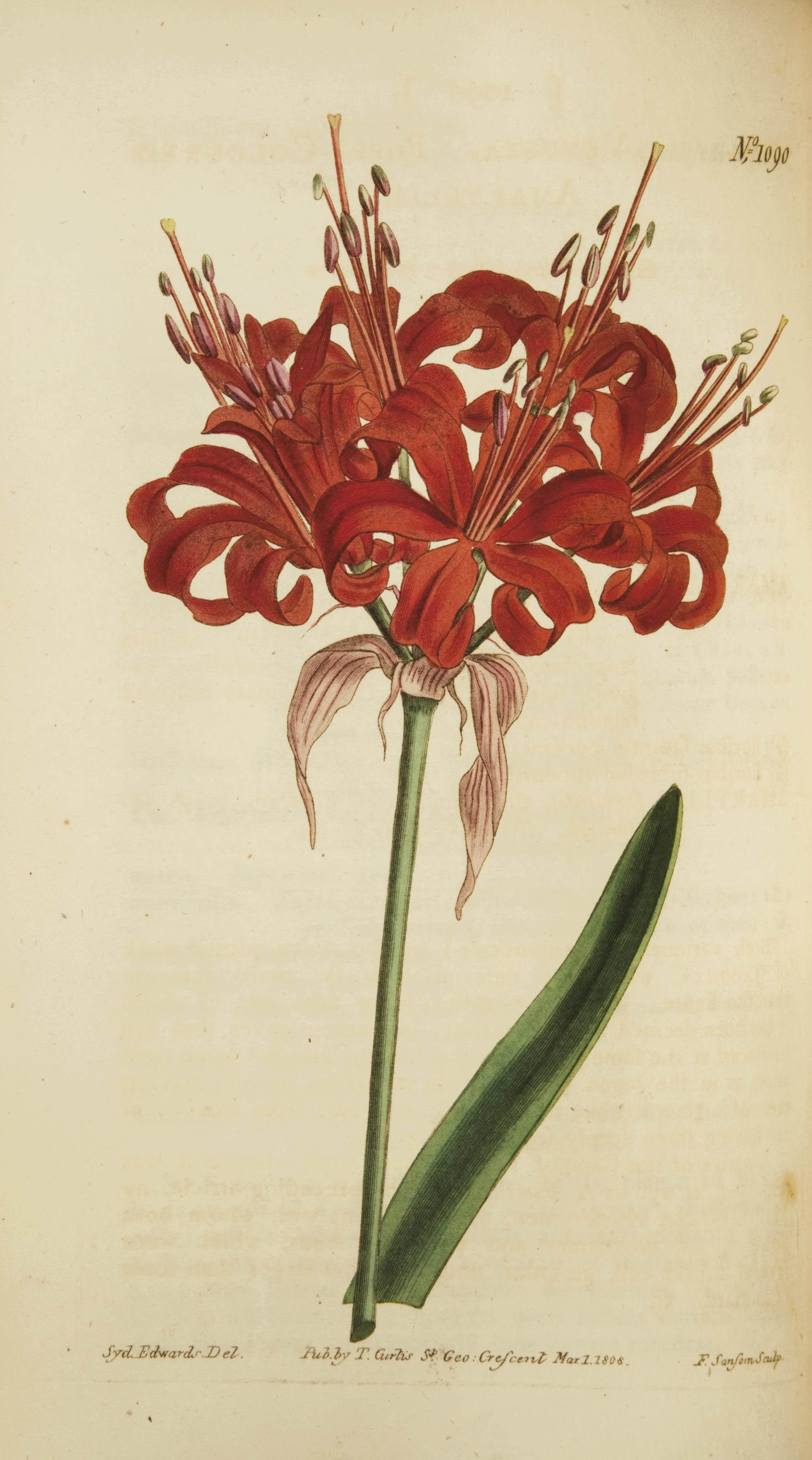 CURTIS, William (1746-1799). The Botanical Magazine; or, Flower-Garden Displayed. Londres: Stephen Couchman, 1793-1814.