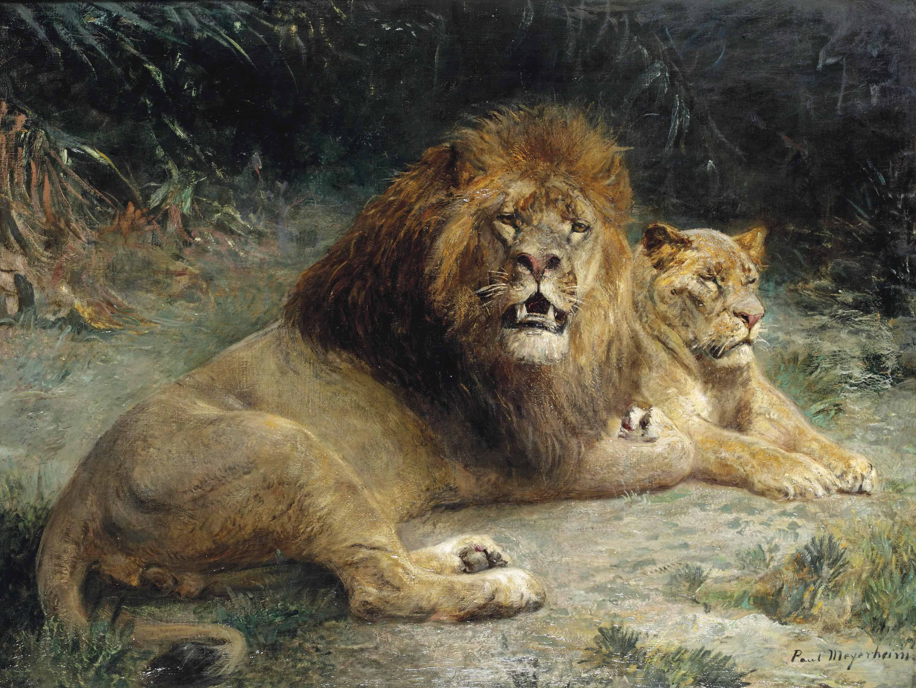 A lion and a lioness basking in the sun