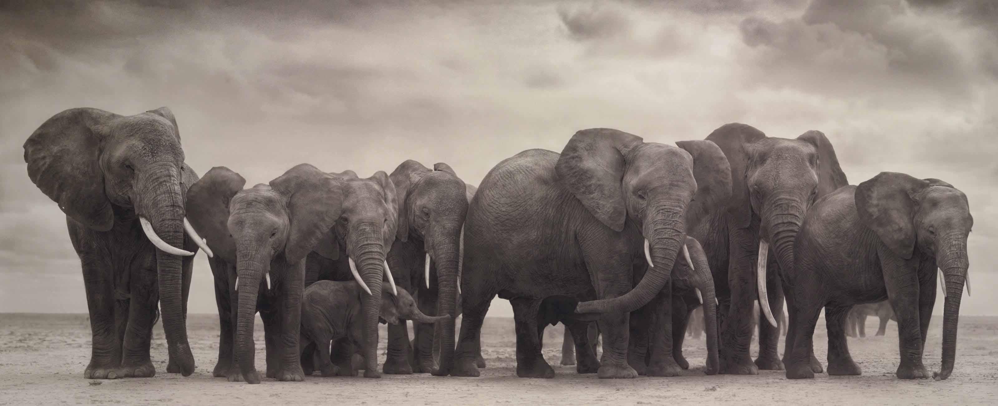 Elephant group on bare earth, Amboseli, 2008