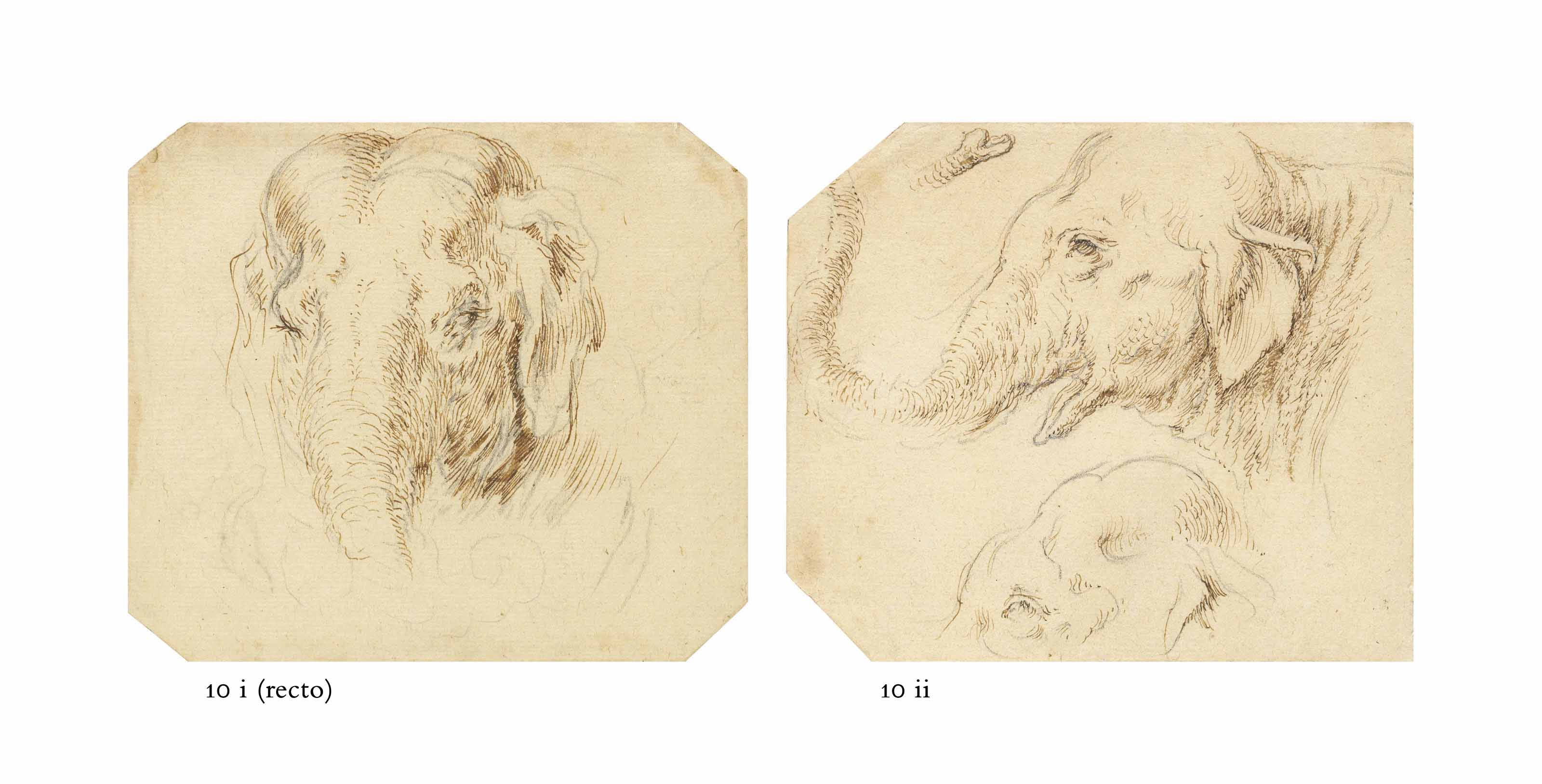 Head of an elephant (recto); Study of a hound's head (verso); and Two studies of an elephant's head in profile