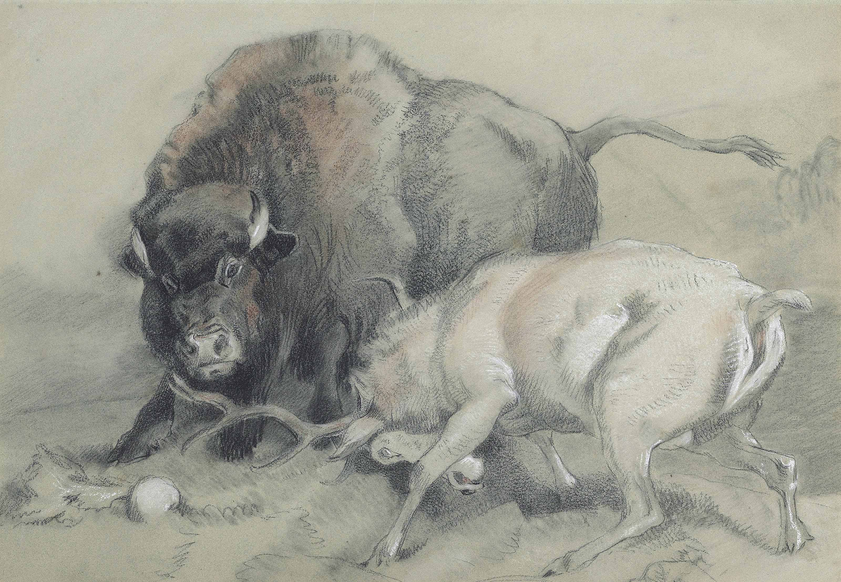A stag challenging a bison
