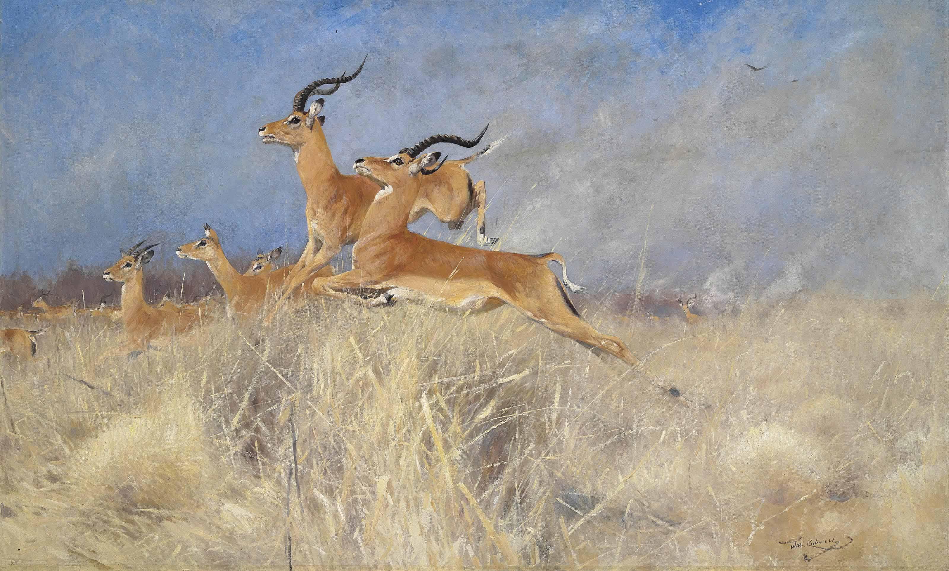Swalla antelope in flight