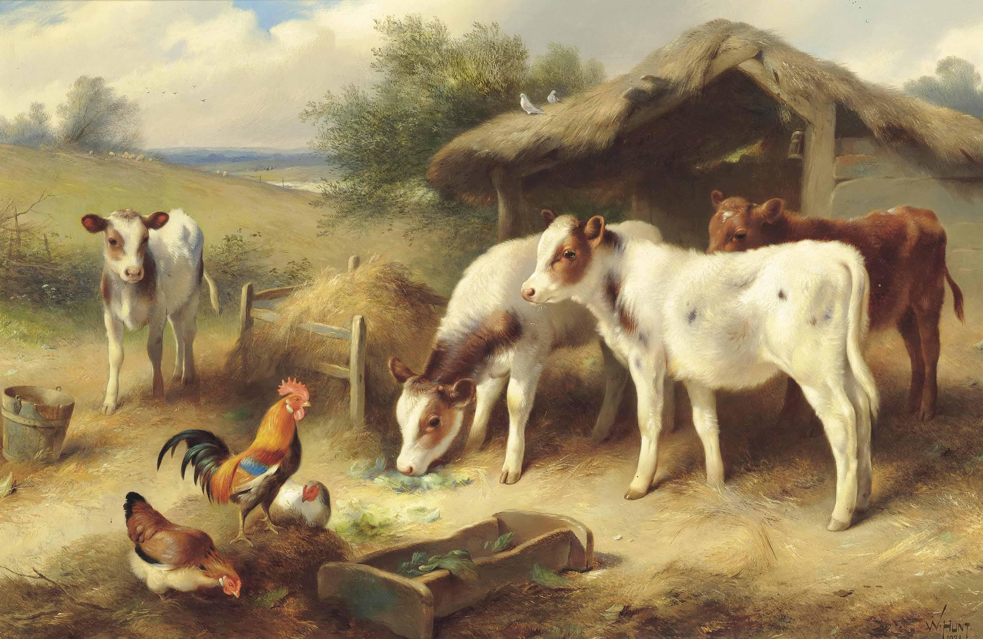Calves, a cockerel and hens beside a barn