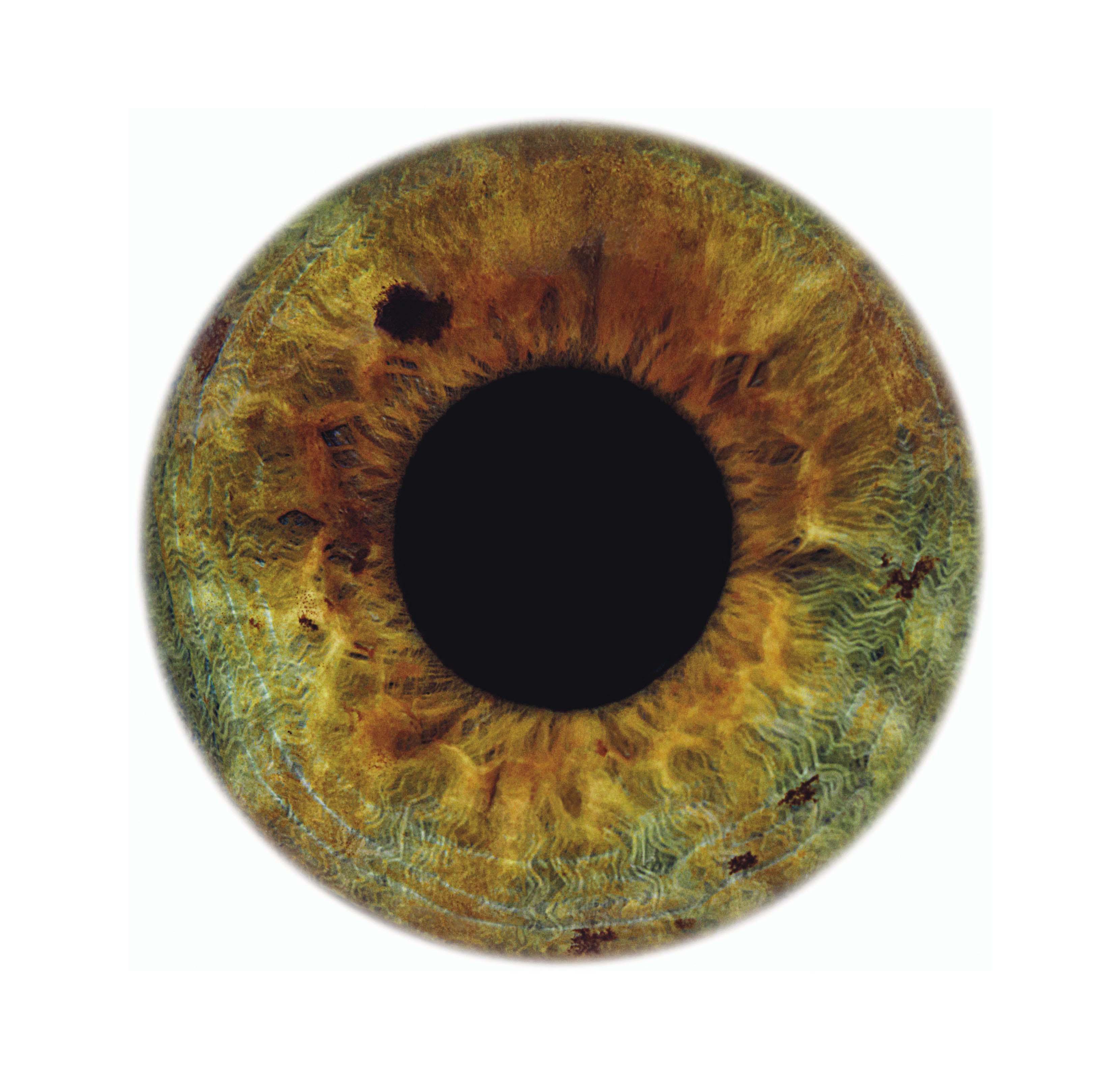 Eyescape Kate, 2012