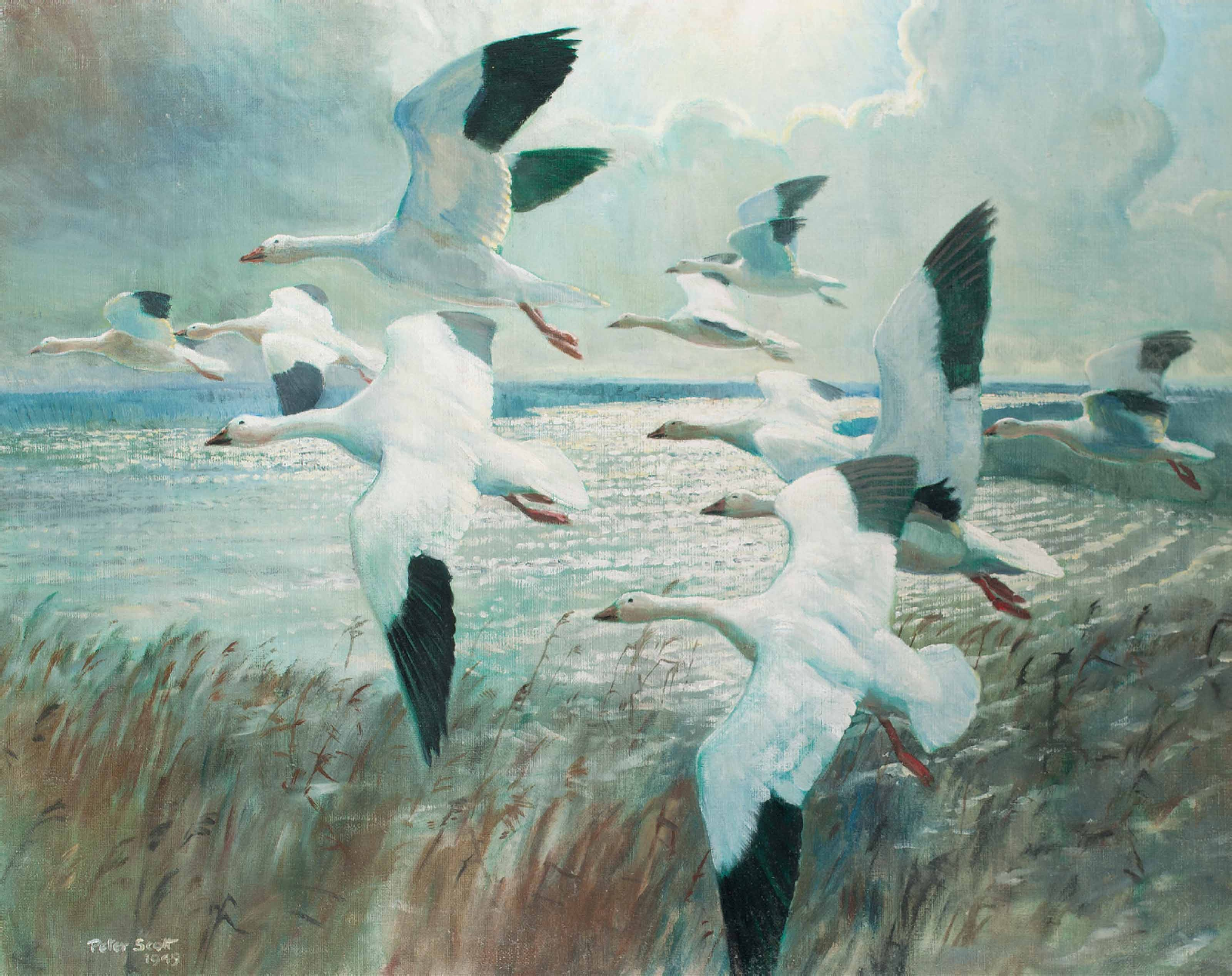 Snow geese before the squall