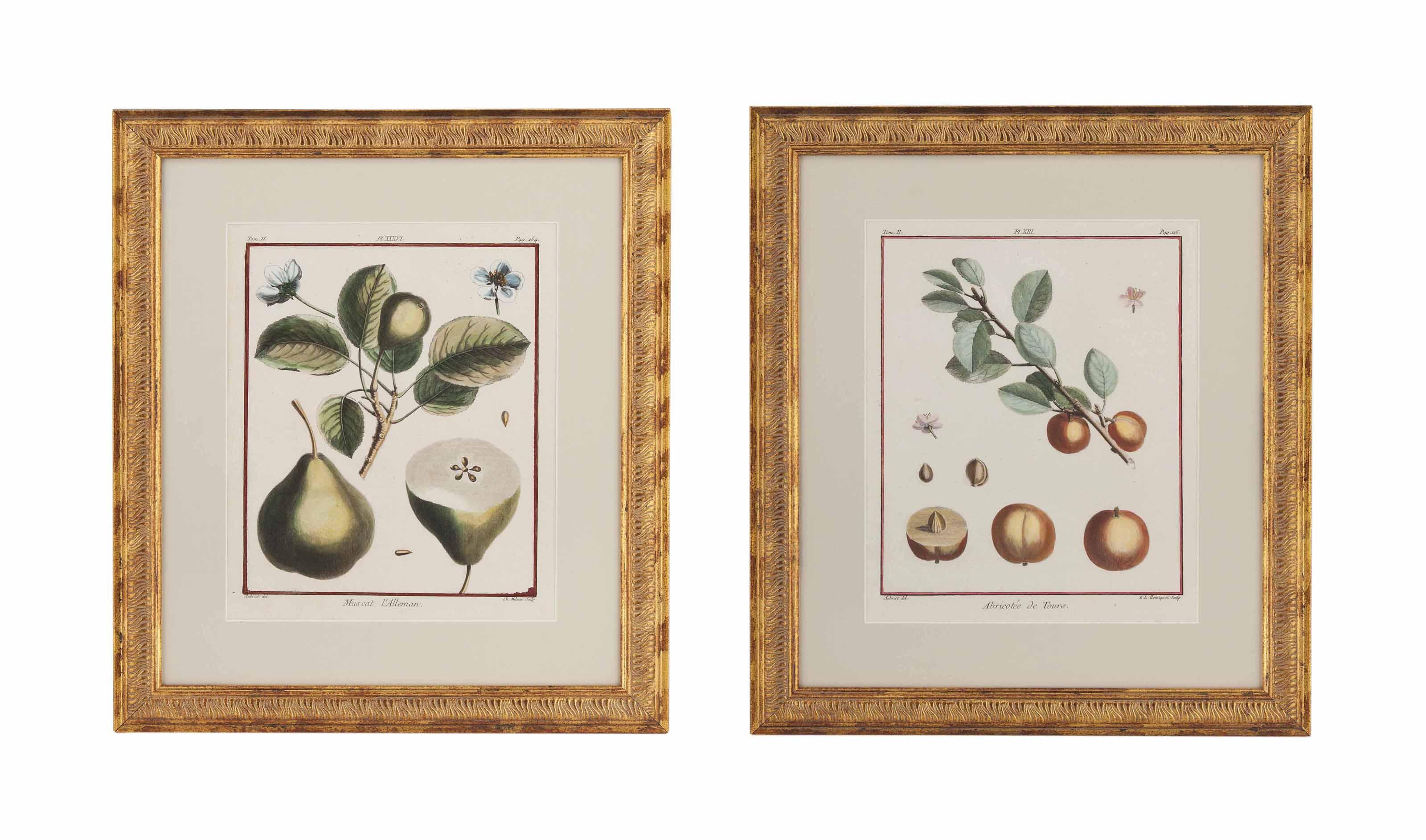 EIGHTEEN HAND COLOURED LITHOGRAPHS OF FRUIT