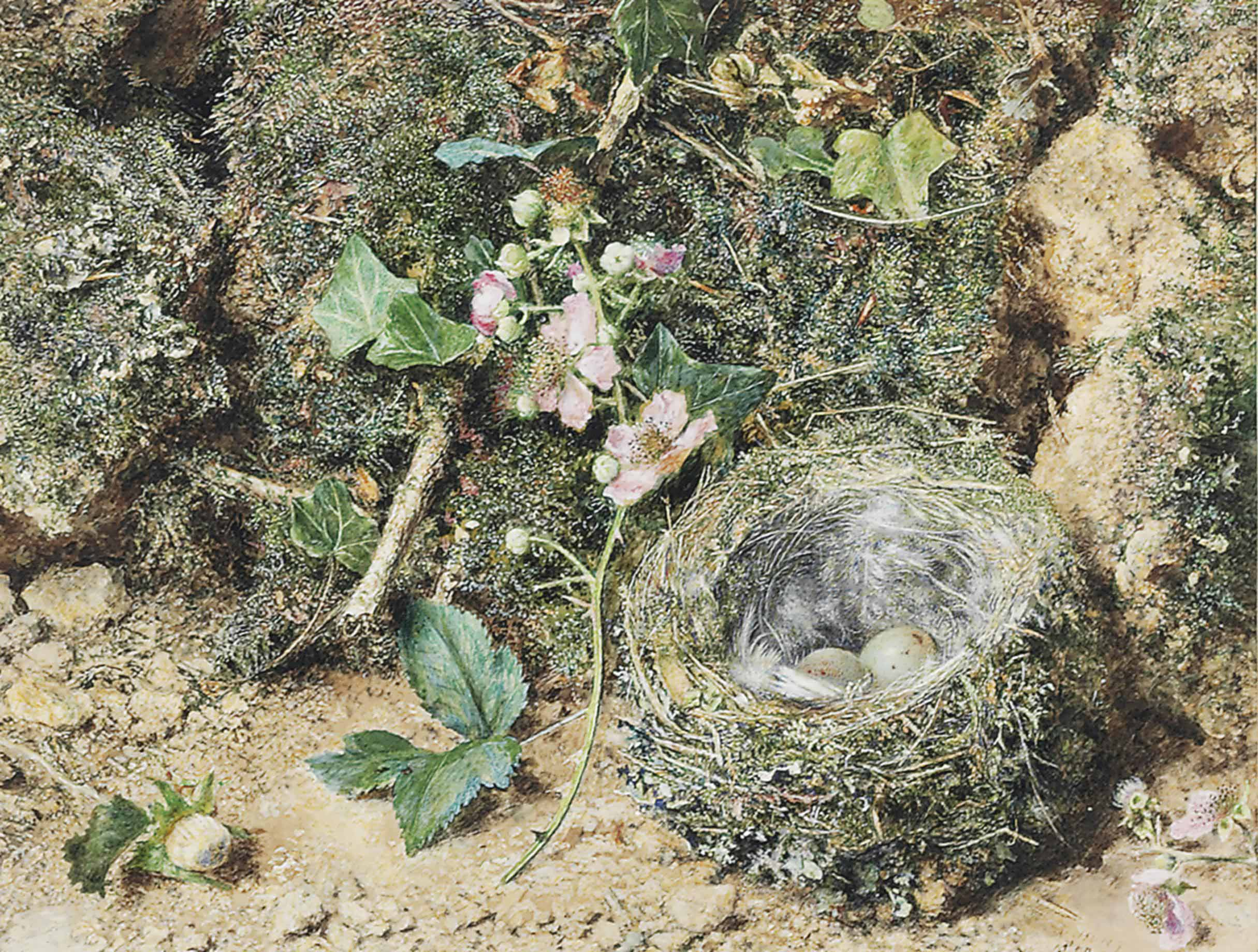 Bird's nest and roses on a mossy bank