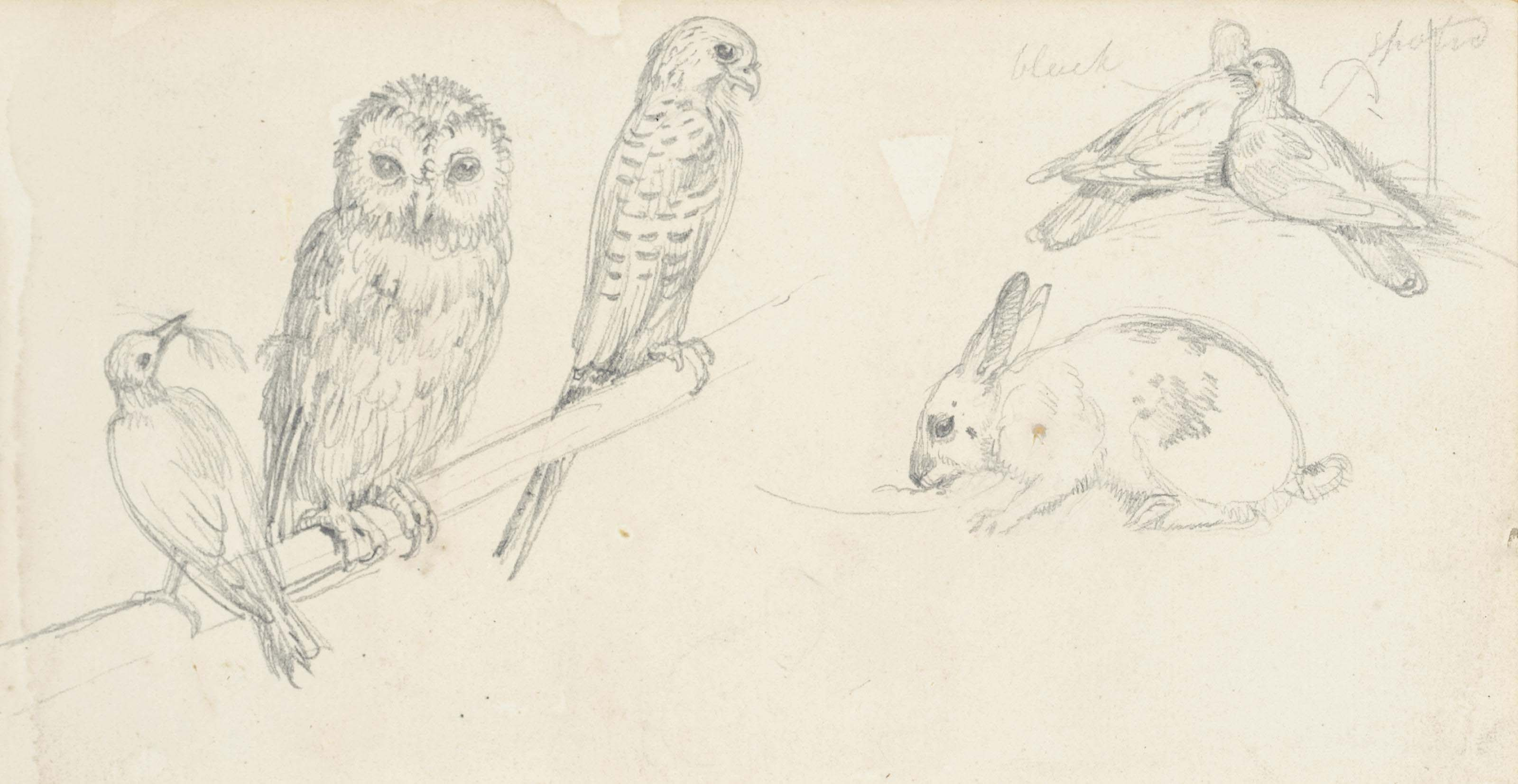 An owl, a rabbit and other animals