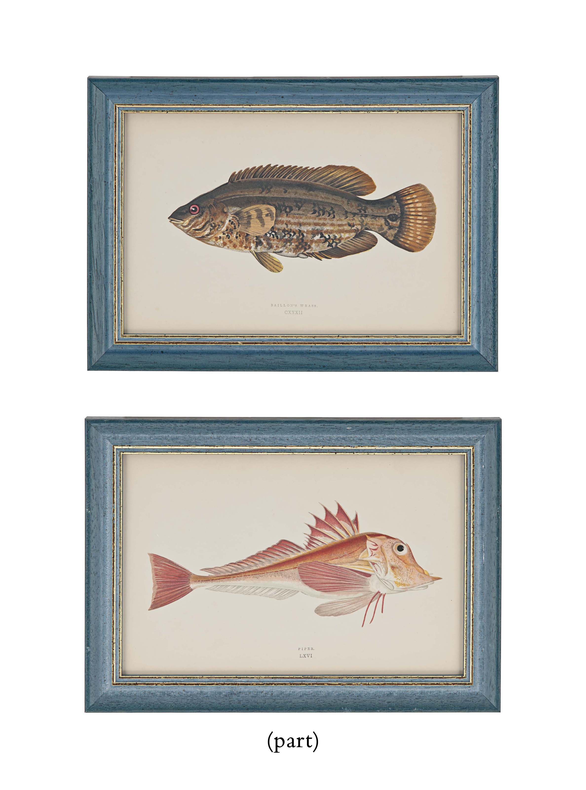 TWENTY HAND-COLOURED ENGRAVINGS OF FISH