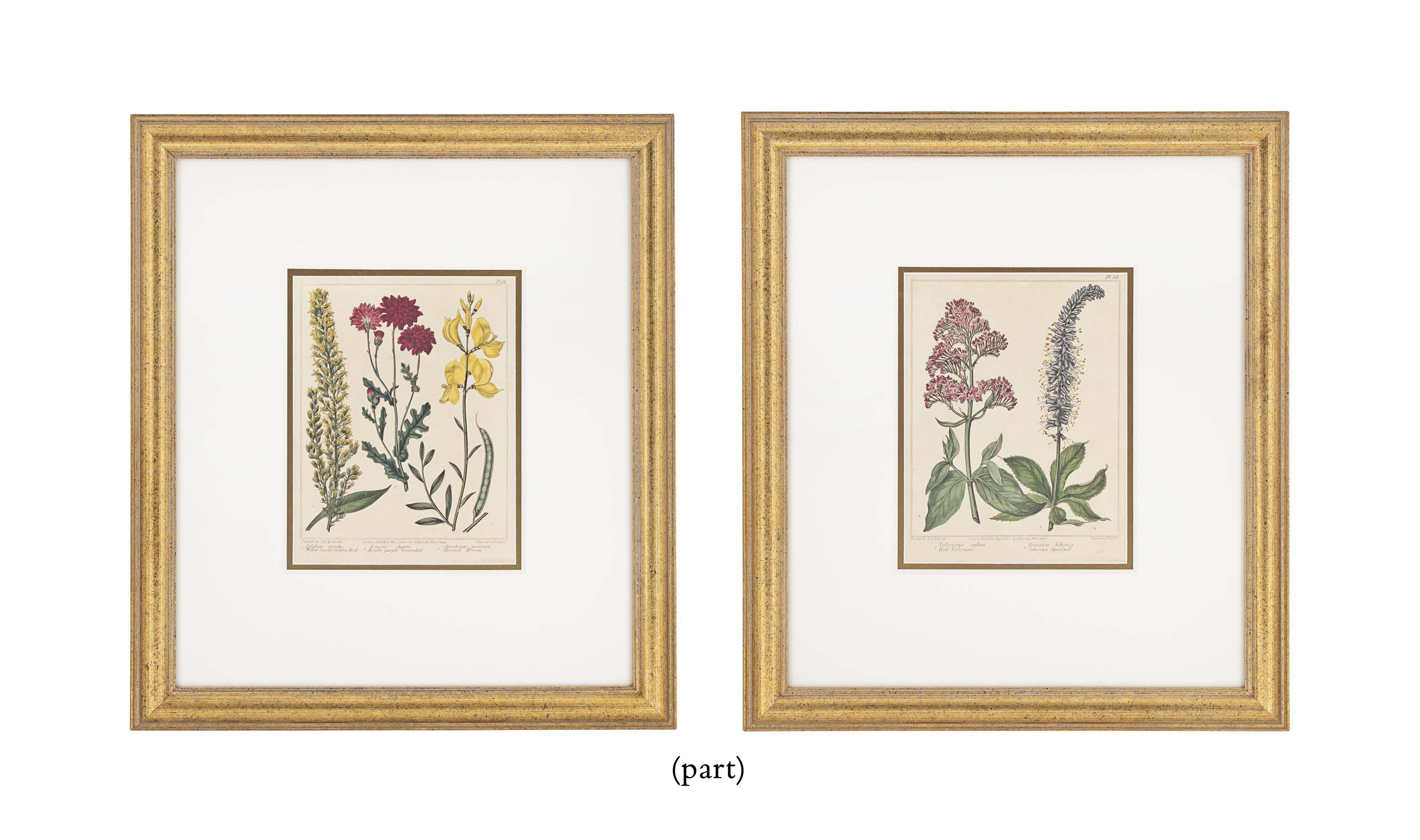 TWELVE HAND-COLOURED ENGRAVINGS FROM 'A COMPLETE DICTIONARY OF PRACTICAL GARDENING COMPREHENDING ALL THE MODERN MOVEMENTS IN THE ART'