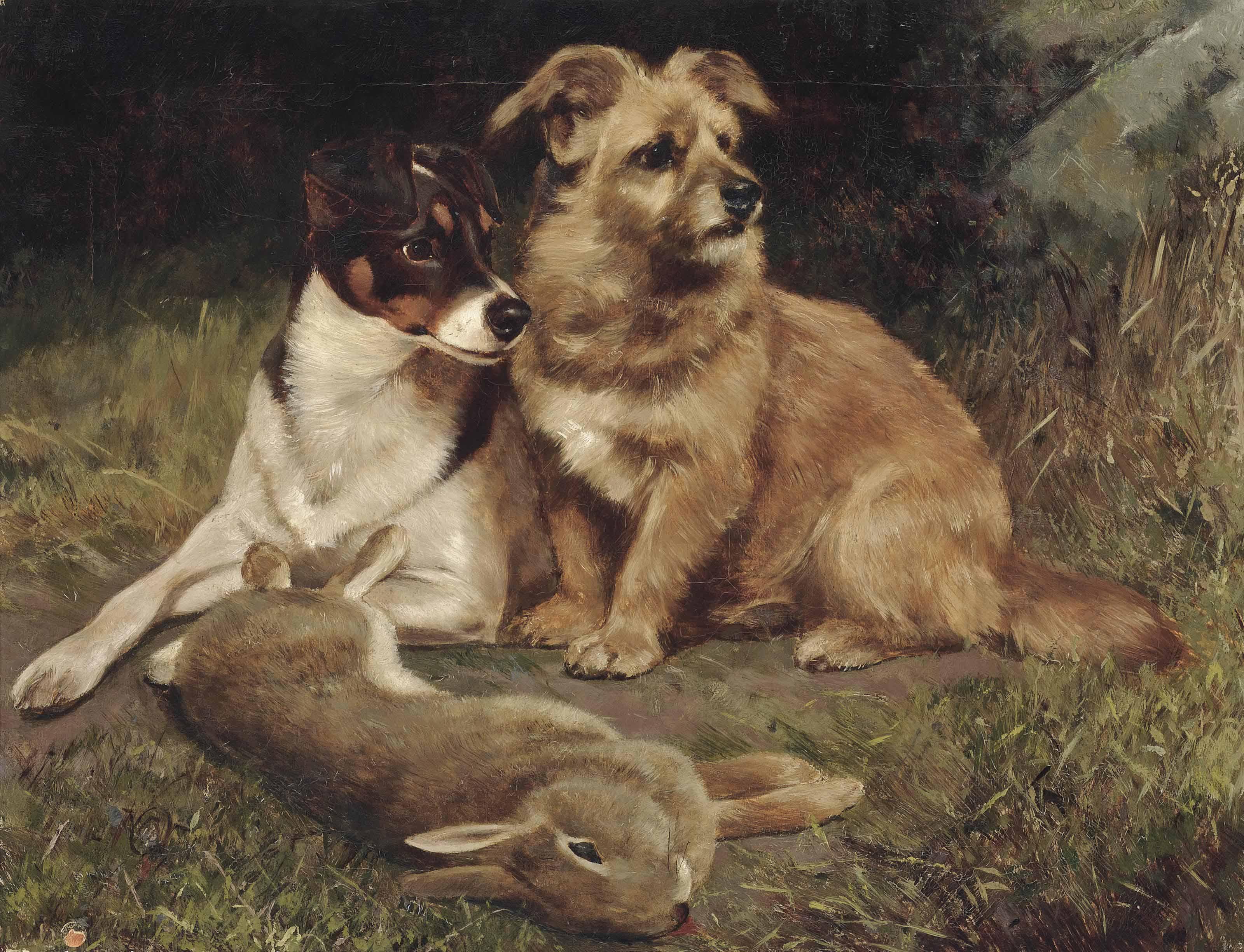 Sport in the rabbit warren