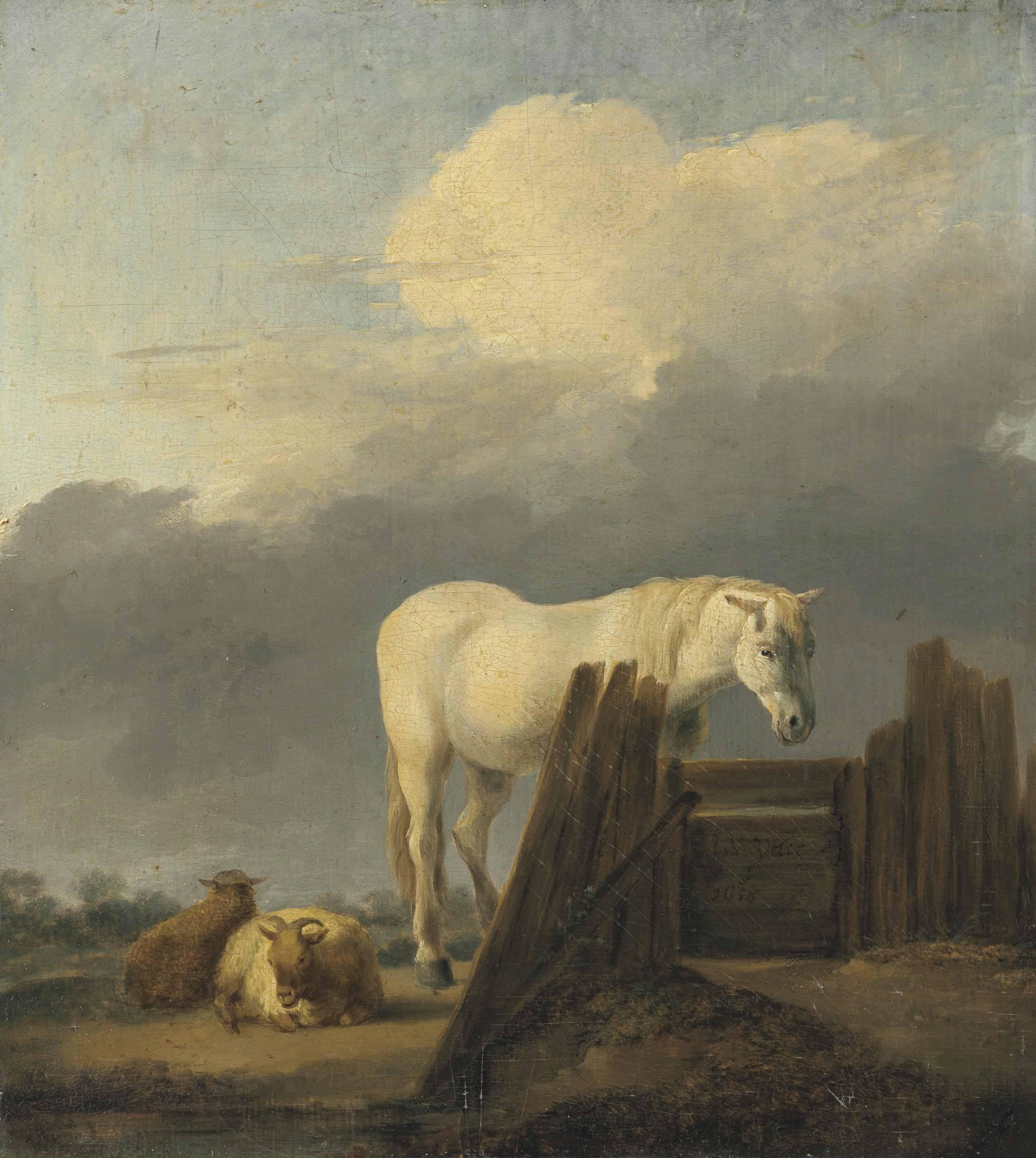 A grey horse at a gate with sheep
