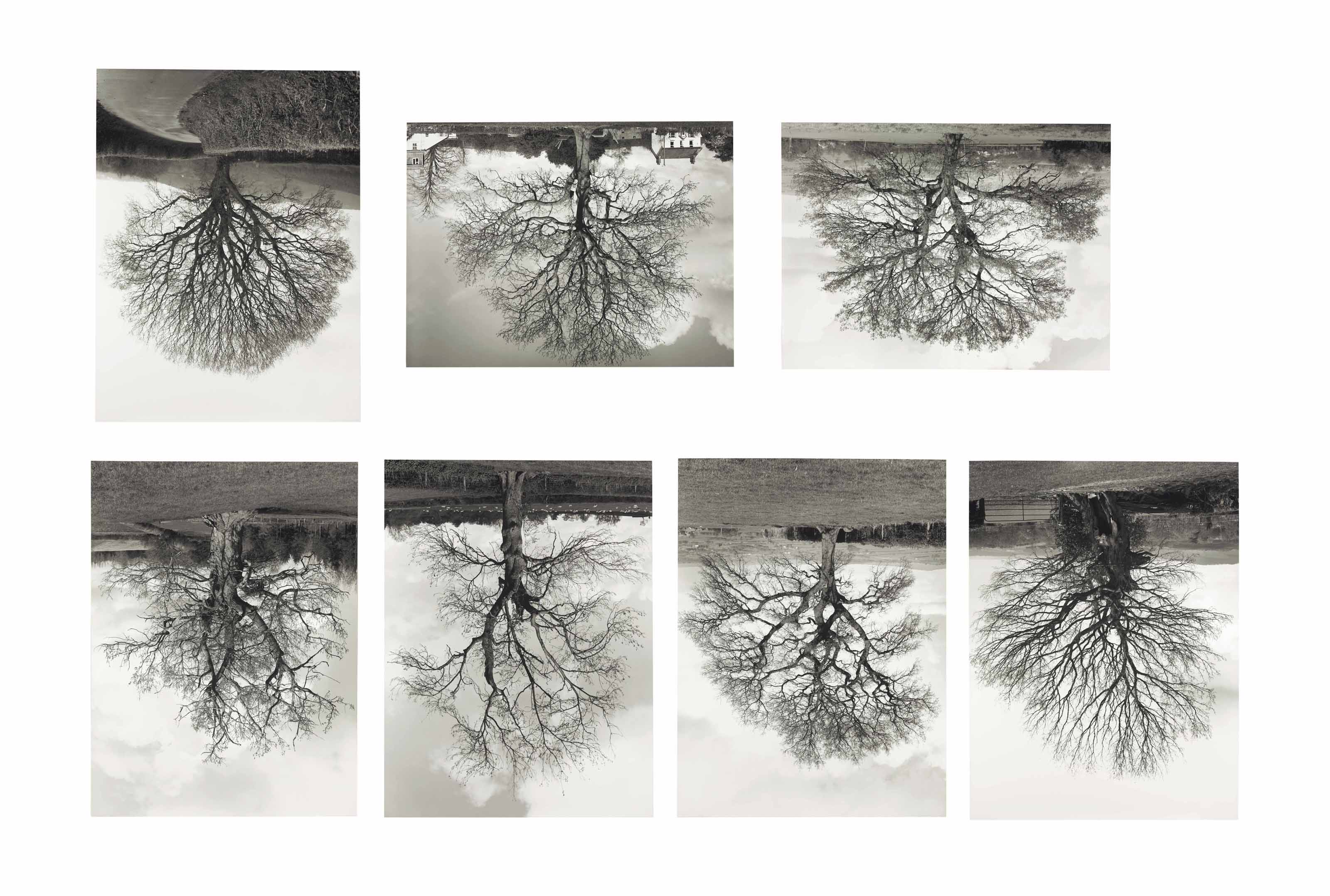 Welsh Oak #1-7