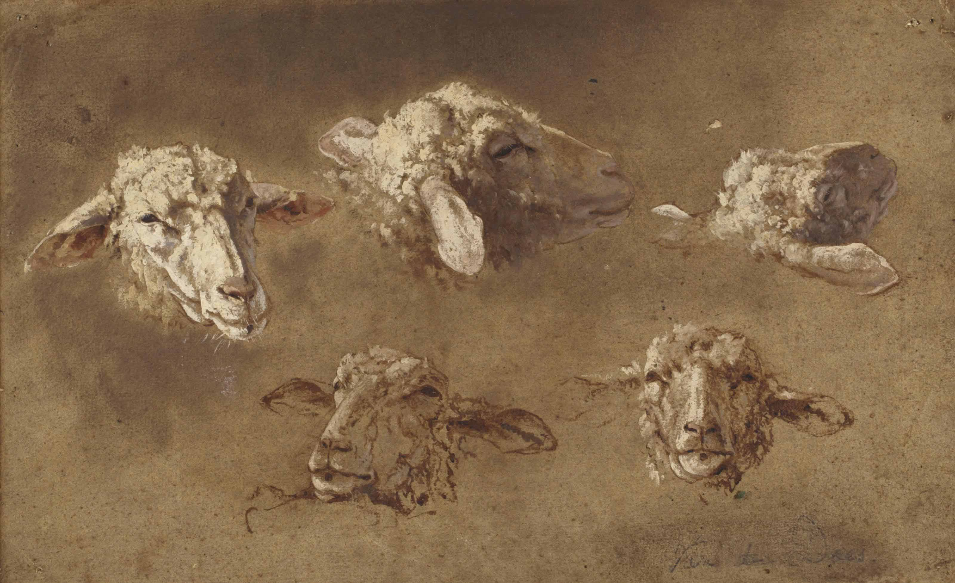 Five studies of the head of a sheep
