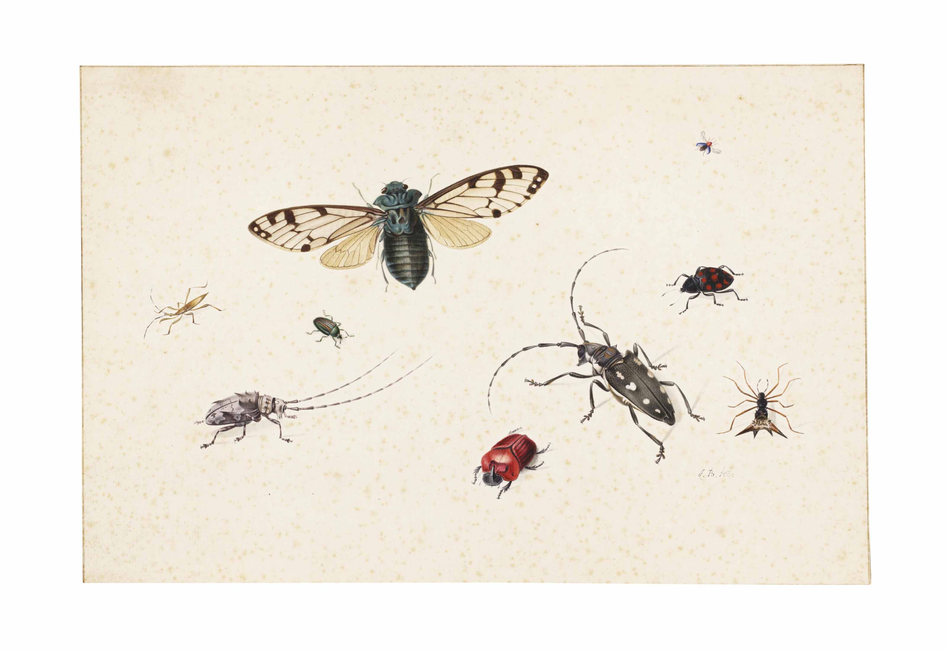 Studies of insects