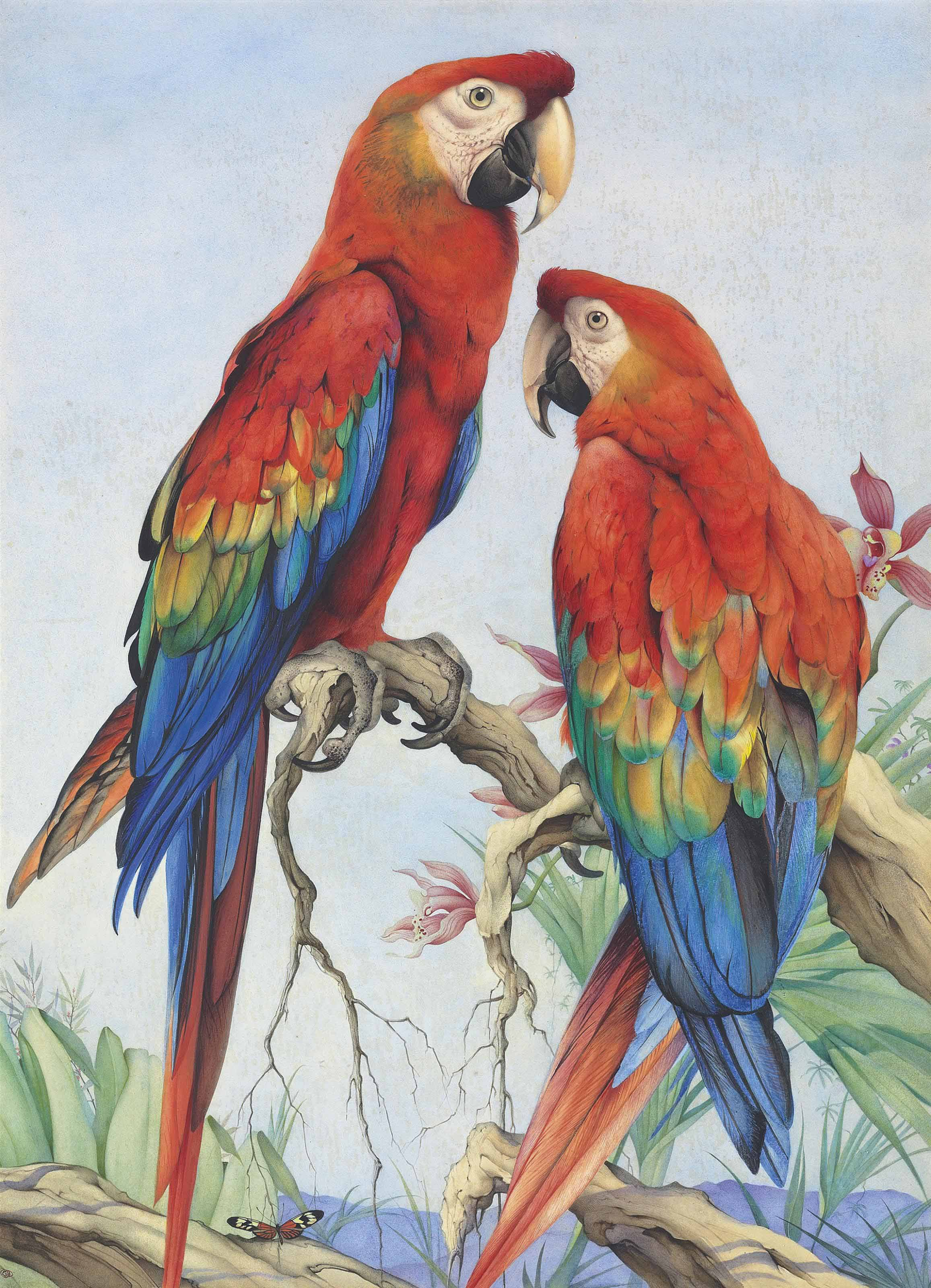 Two scarlet macaws with orchids and a butterfly
