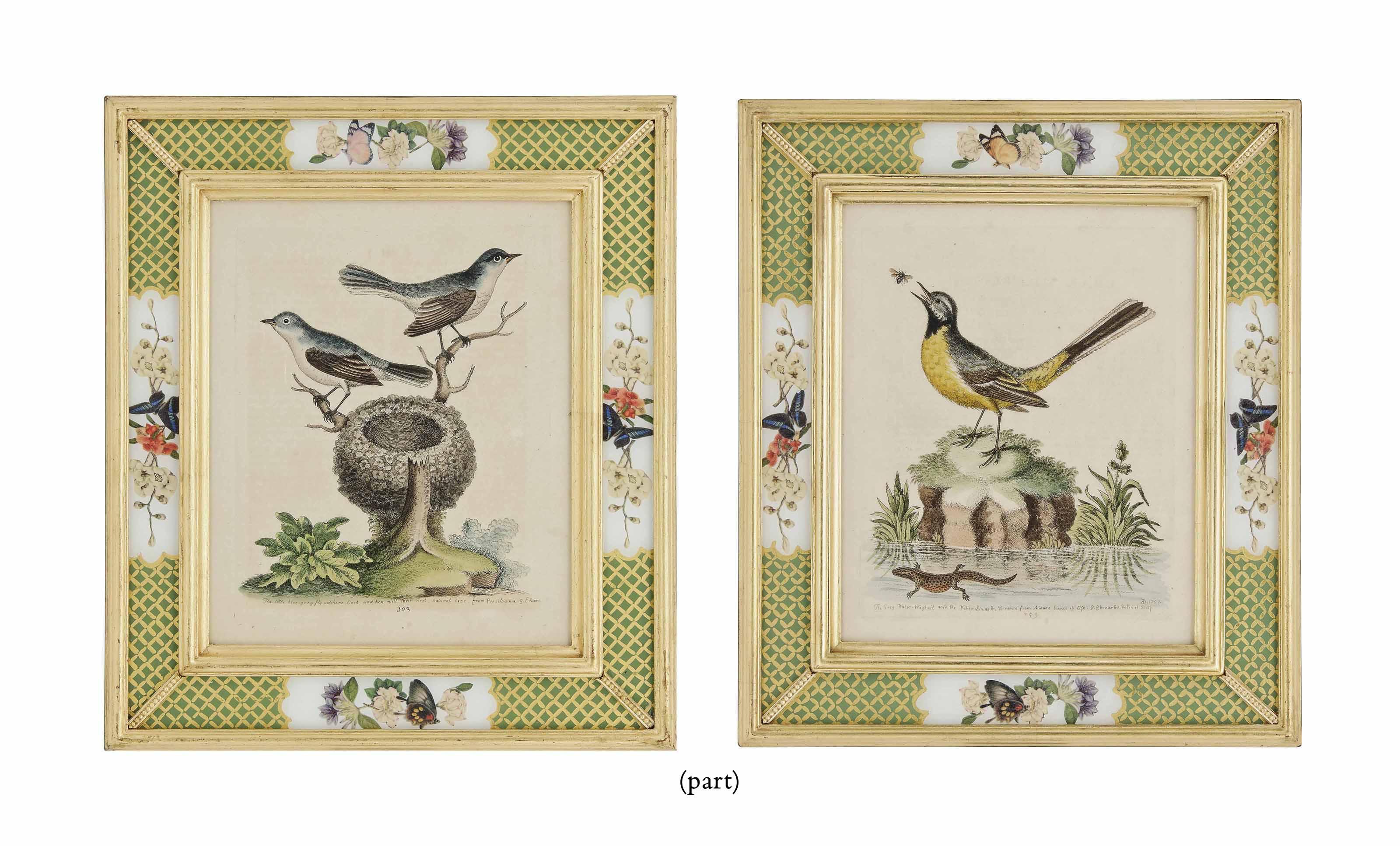 NINE HAND-COLOURED ENGRAVINGS OF BIRDS