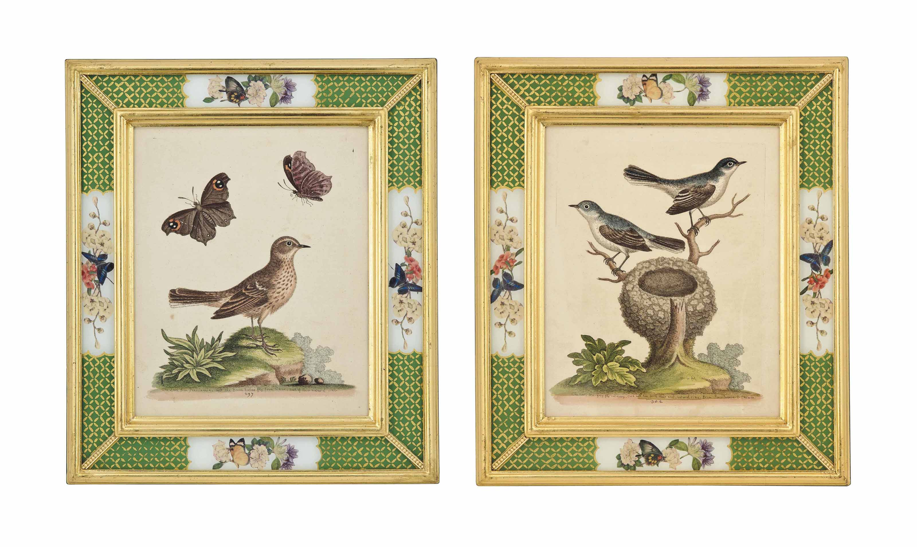 TWELVE ENGRAVINGS FROM A NATURAL HISTORY OF UNCOMMON BIRDS