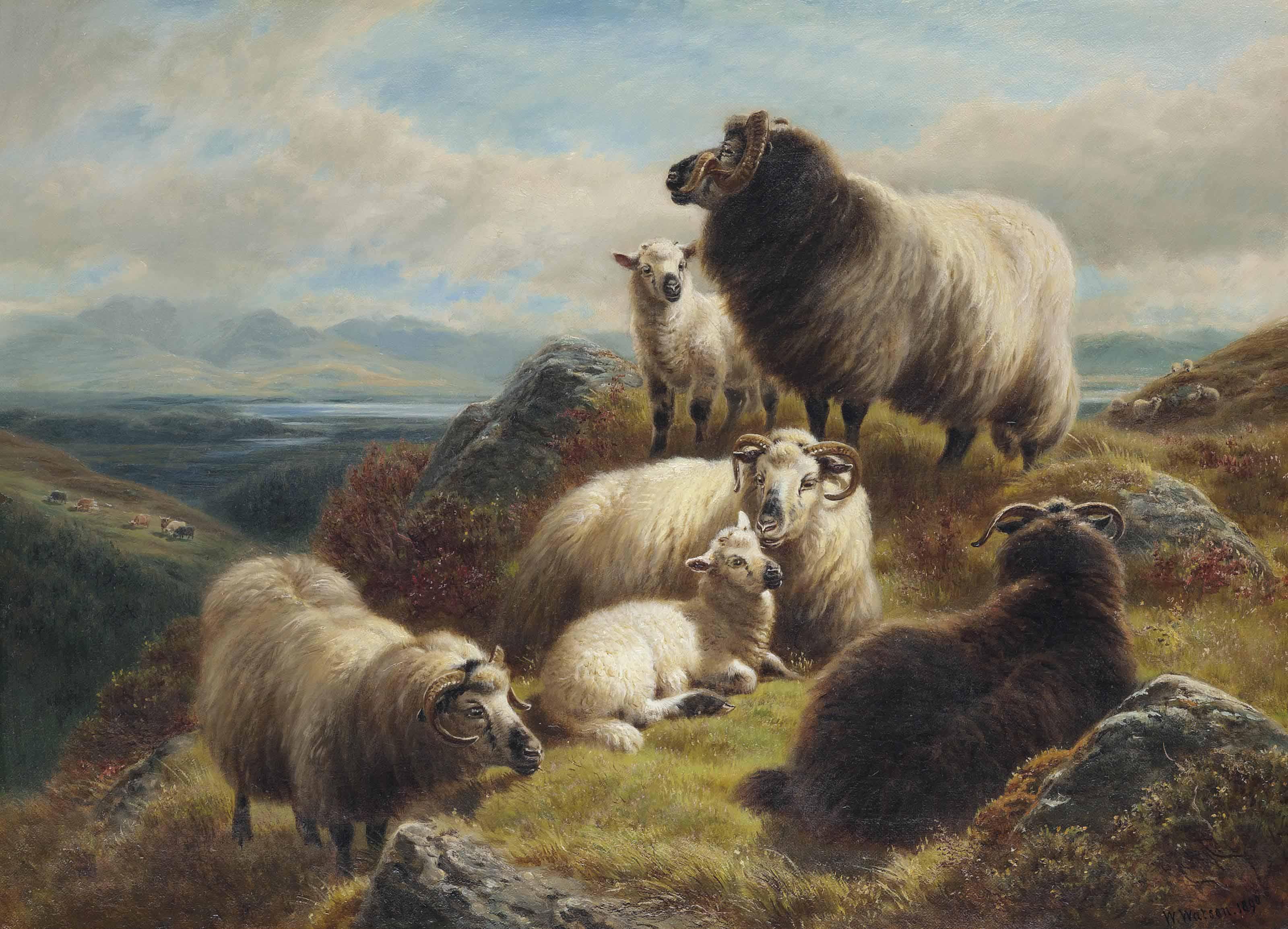 Sheep in a highland landscape
