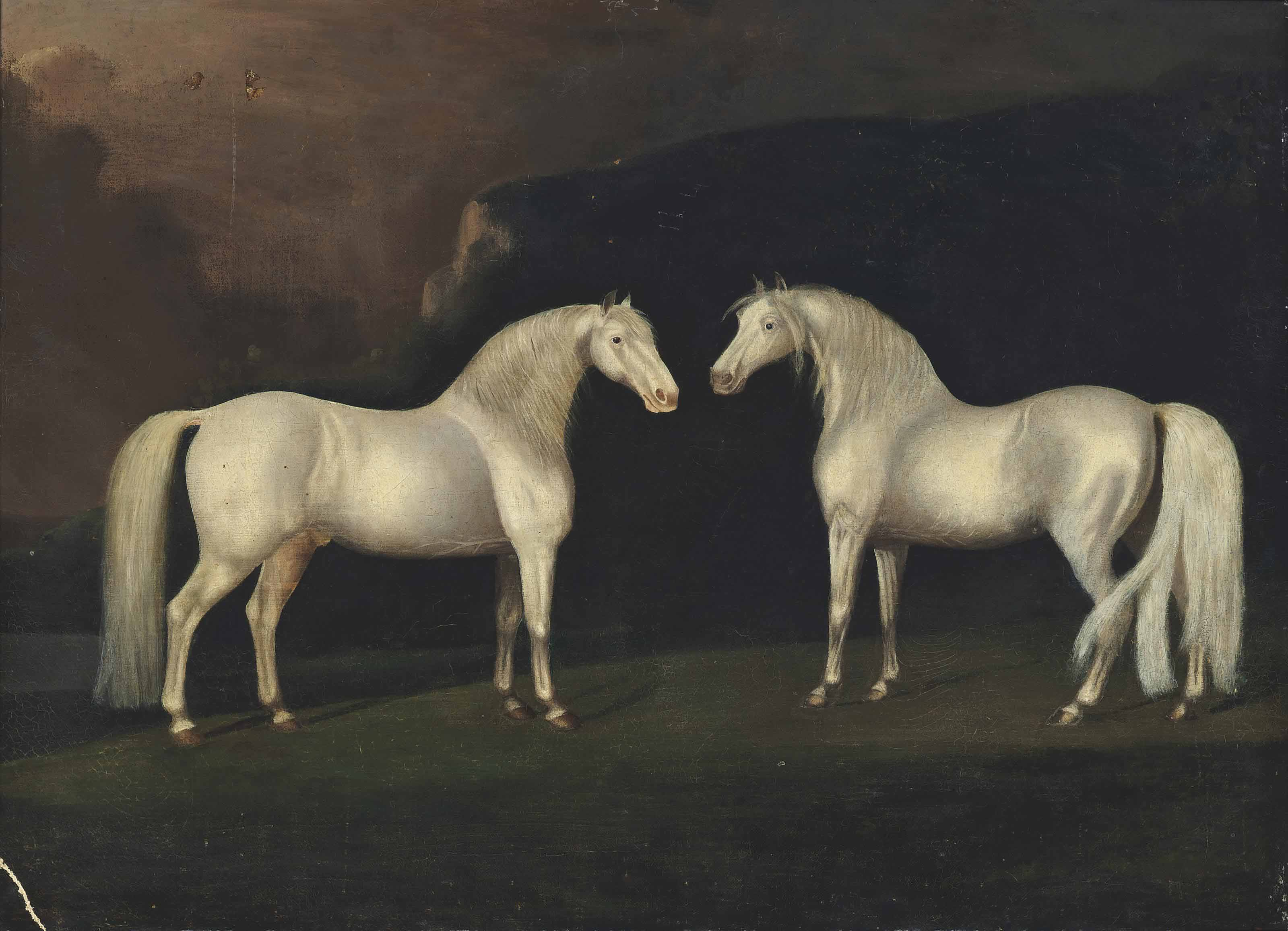 Grey stallions in a landscape