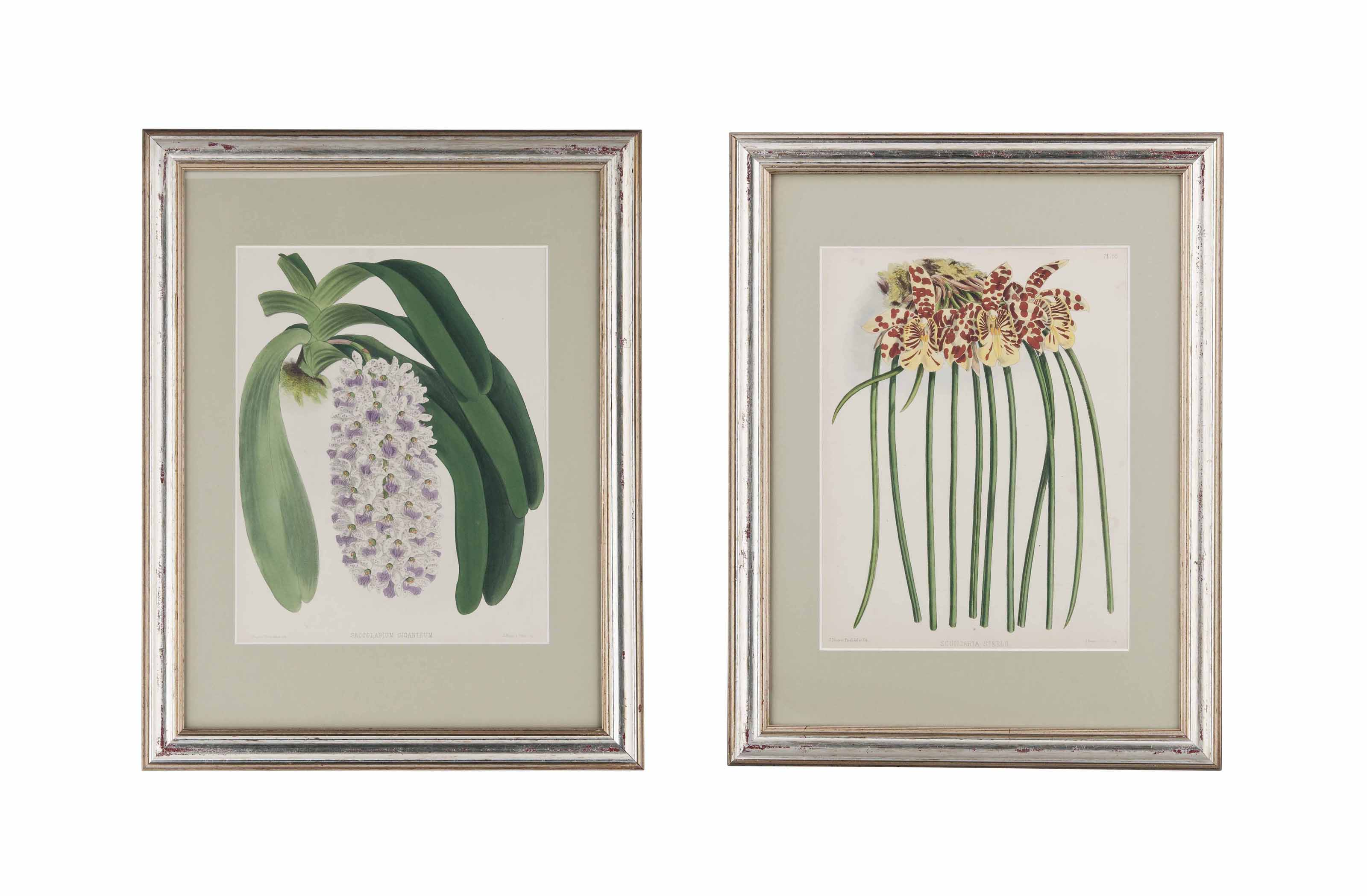TWELVE COLOURED LITHOGRAPHS FROM THE ORCHID ALBUM