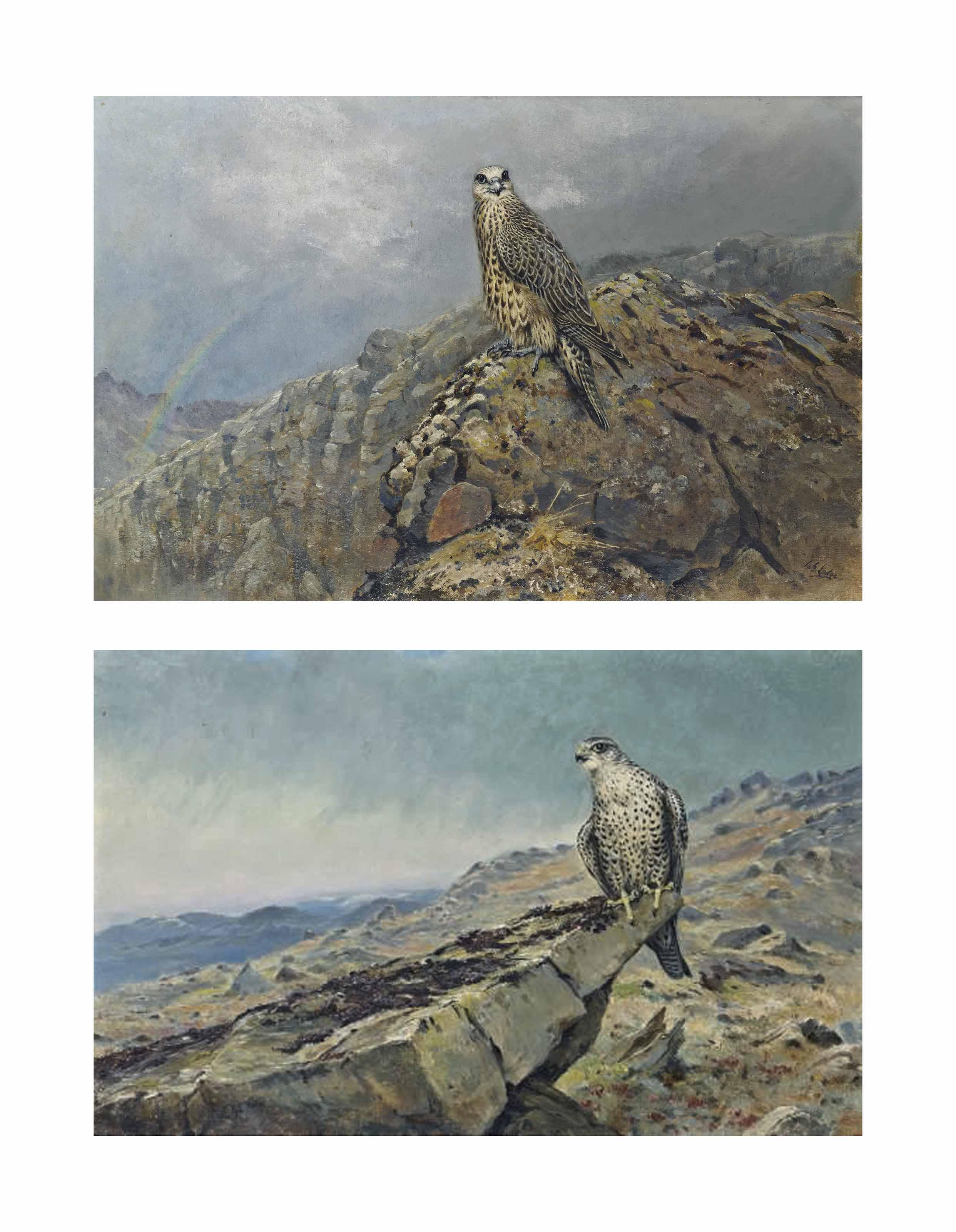 Gyr falcon on a rocky crag; and Gyr falcon with a rainbow beyond