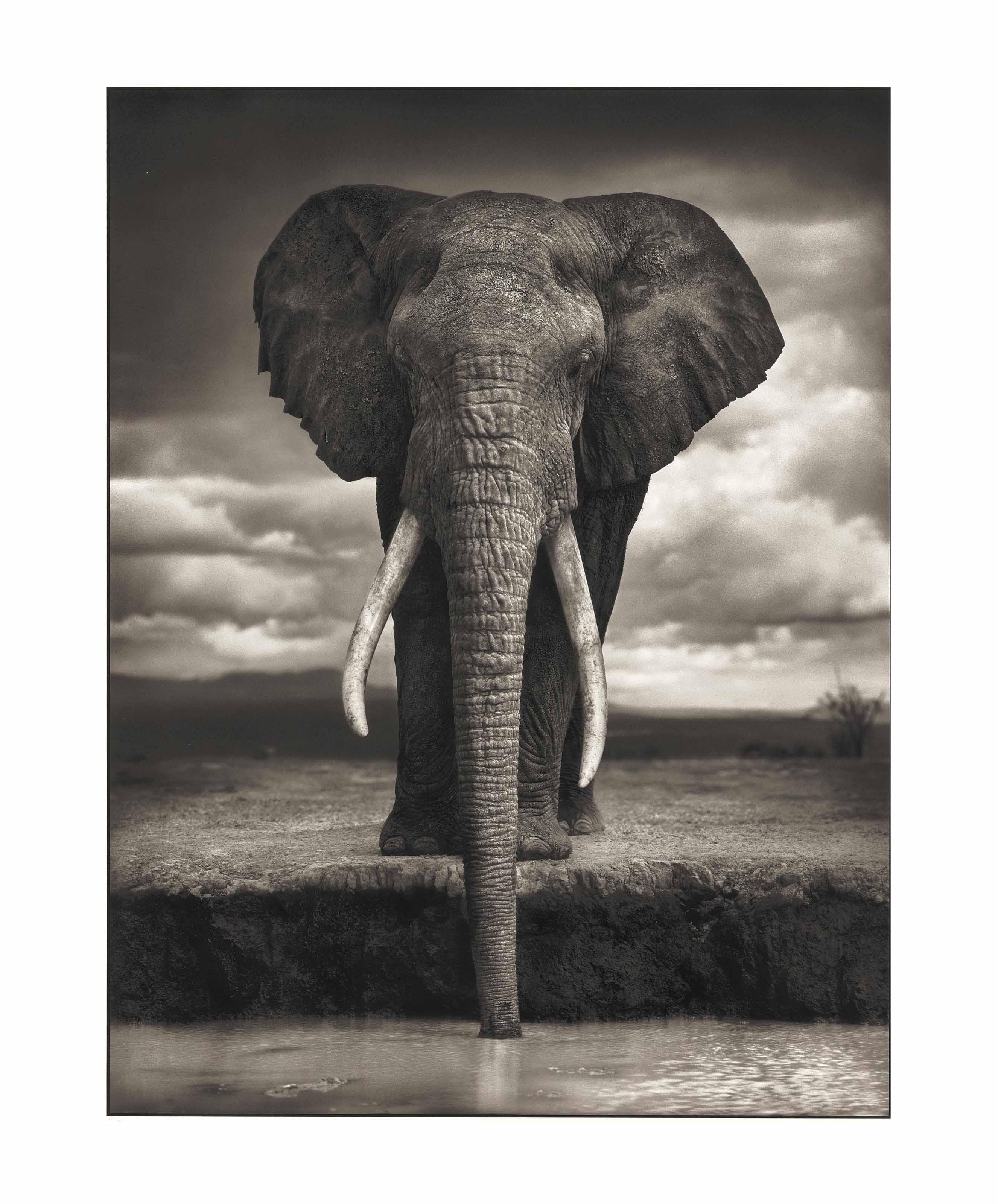 Elephant drinking, Amboseli, 2007