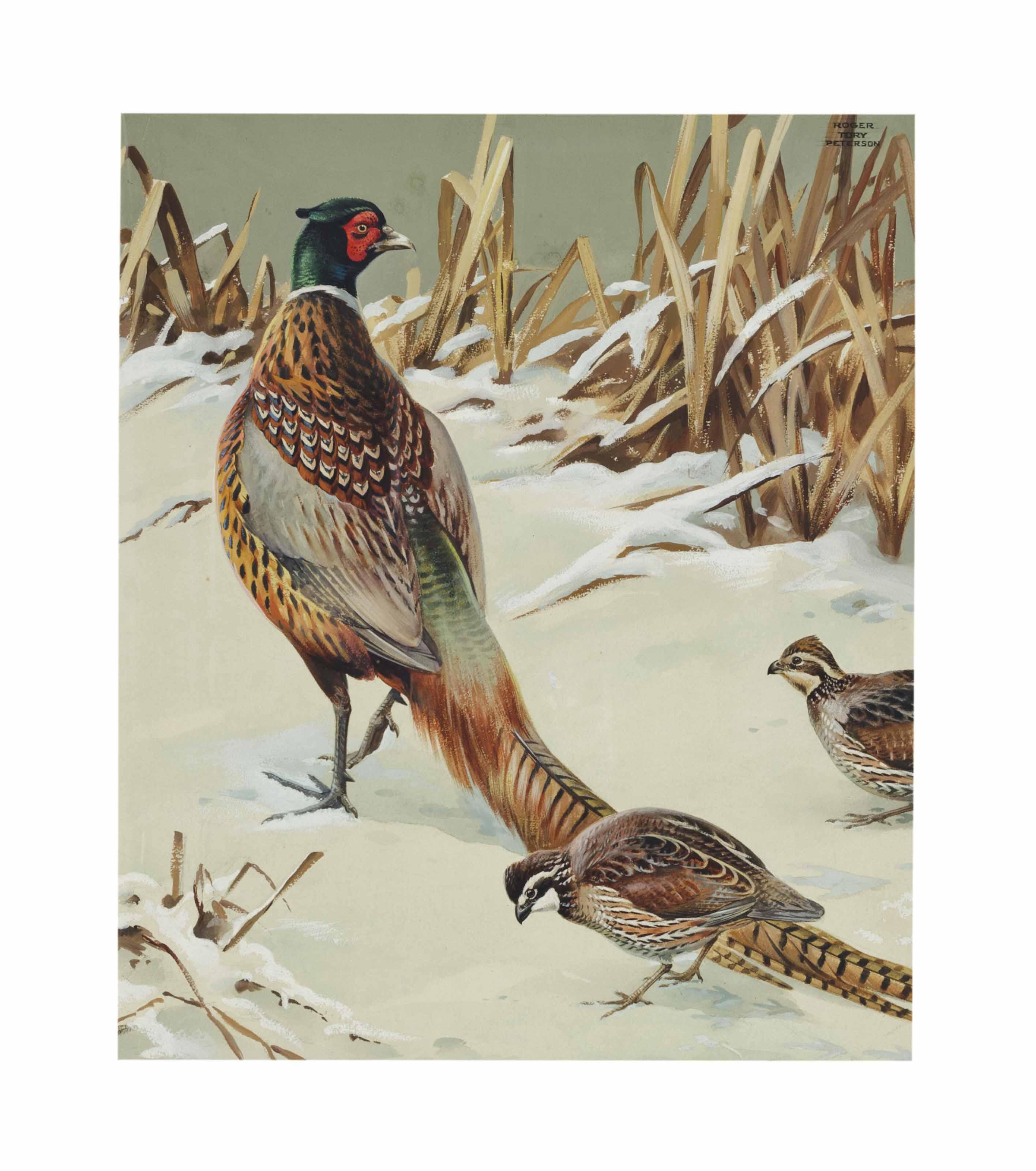 Pheasant and Quail