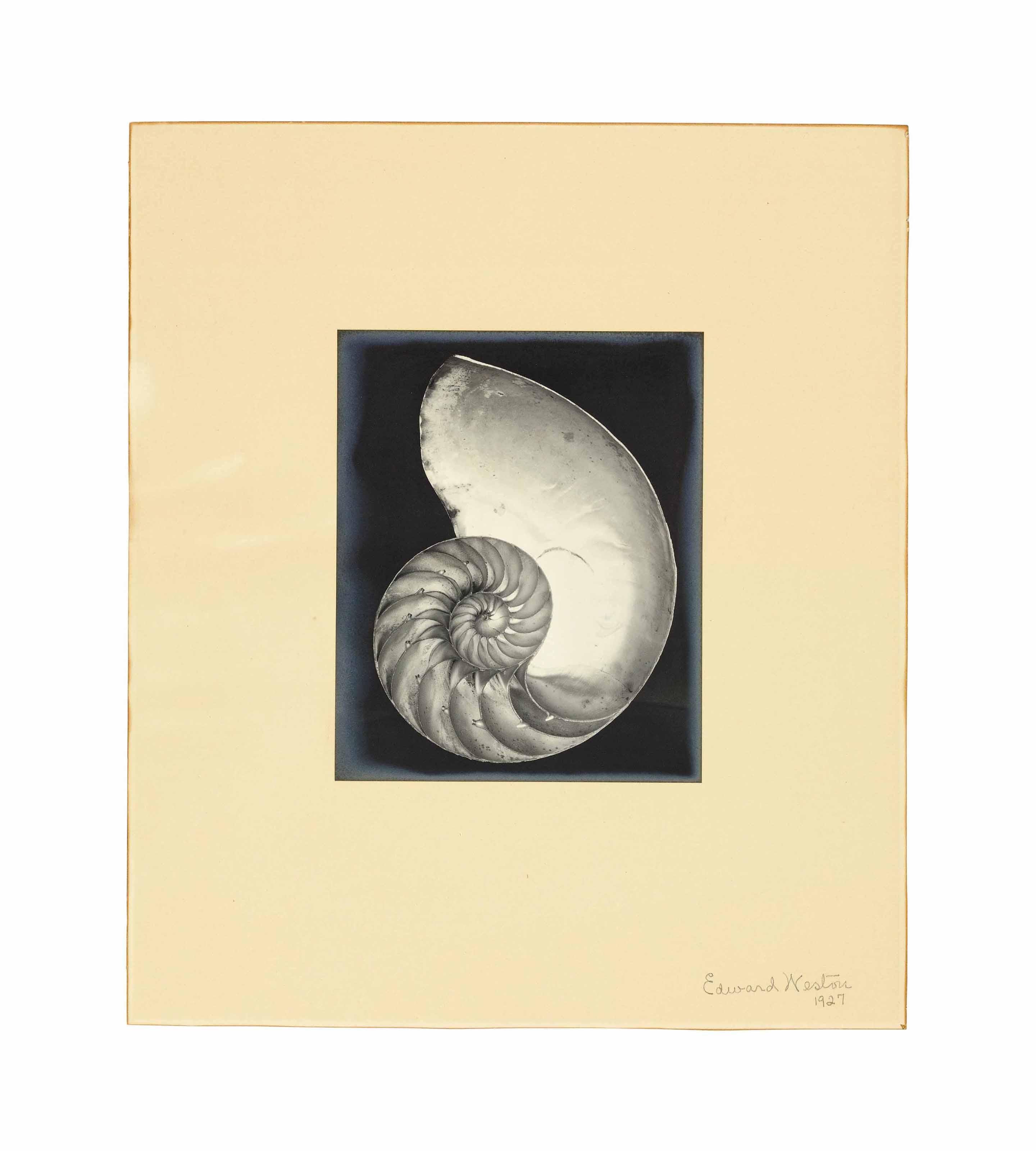 Nautilus Shell, 1927