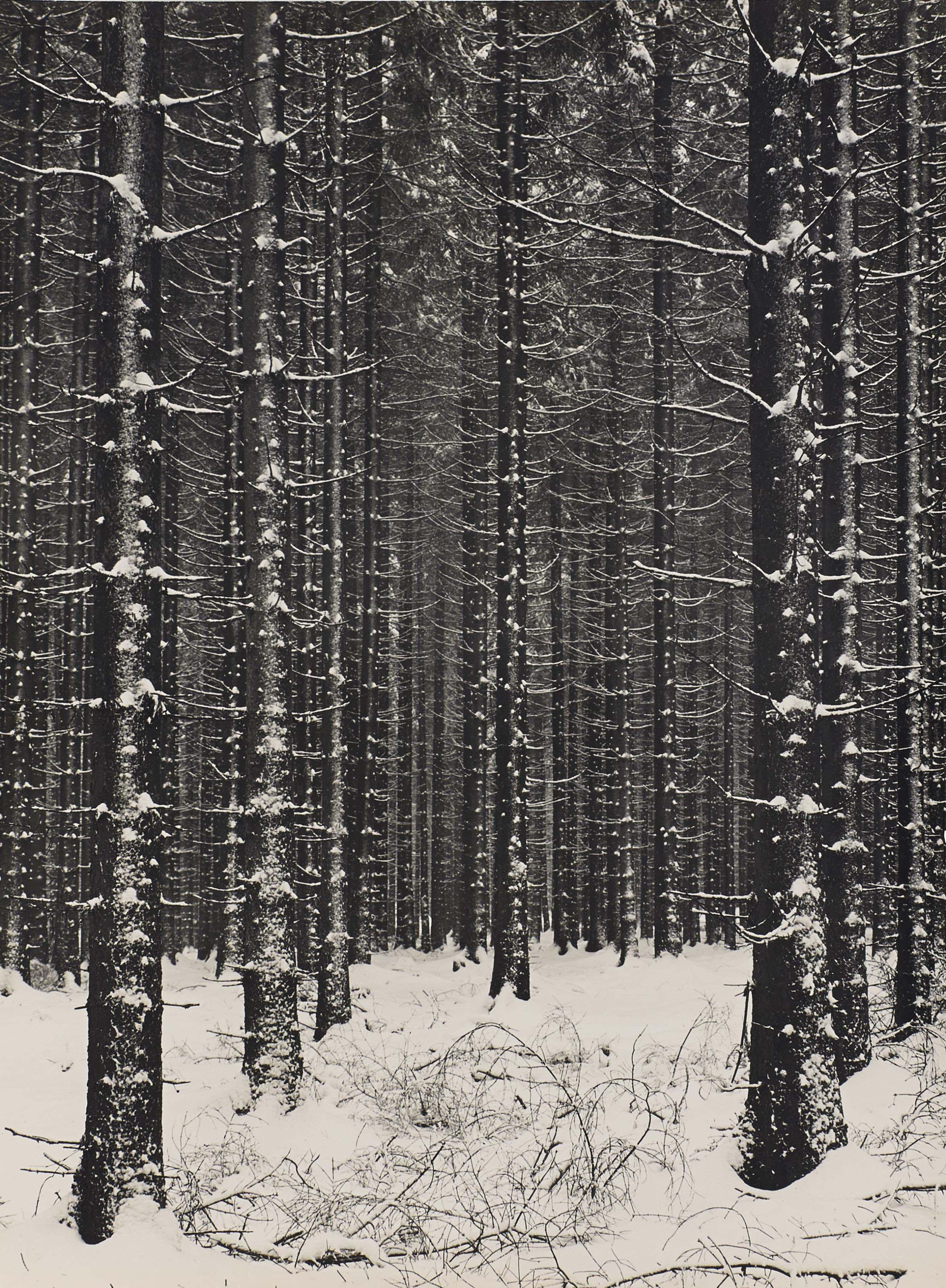 Gebirgsforst (forêt de montagne), 1926