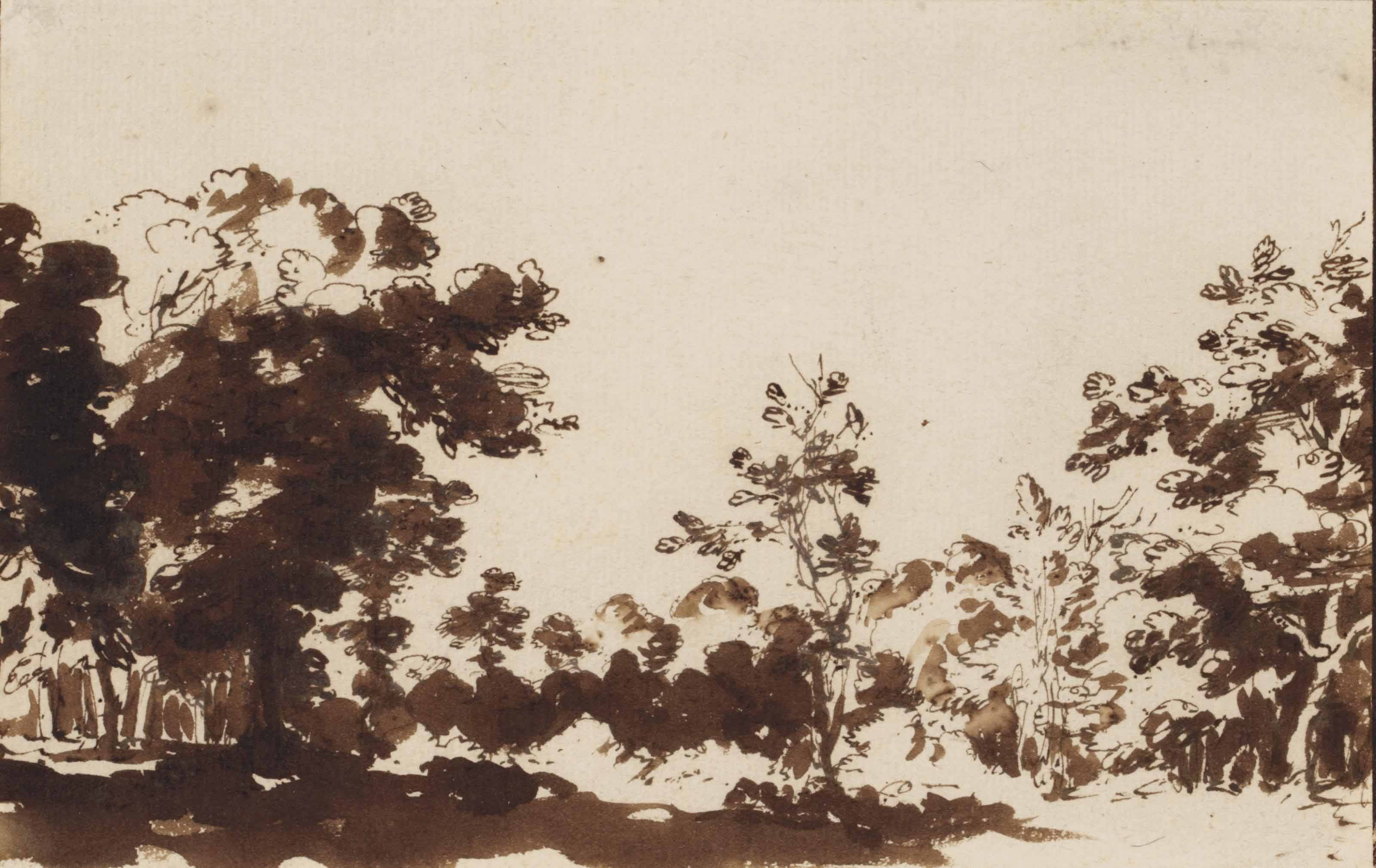 View of the woods at The Hague
