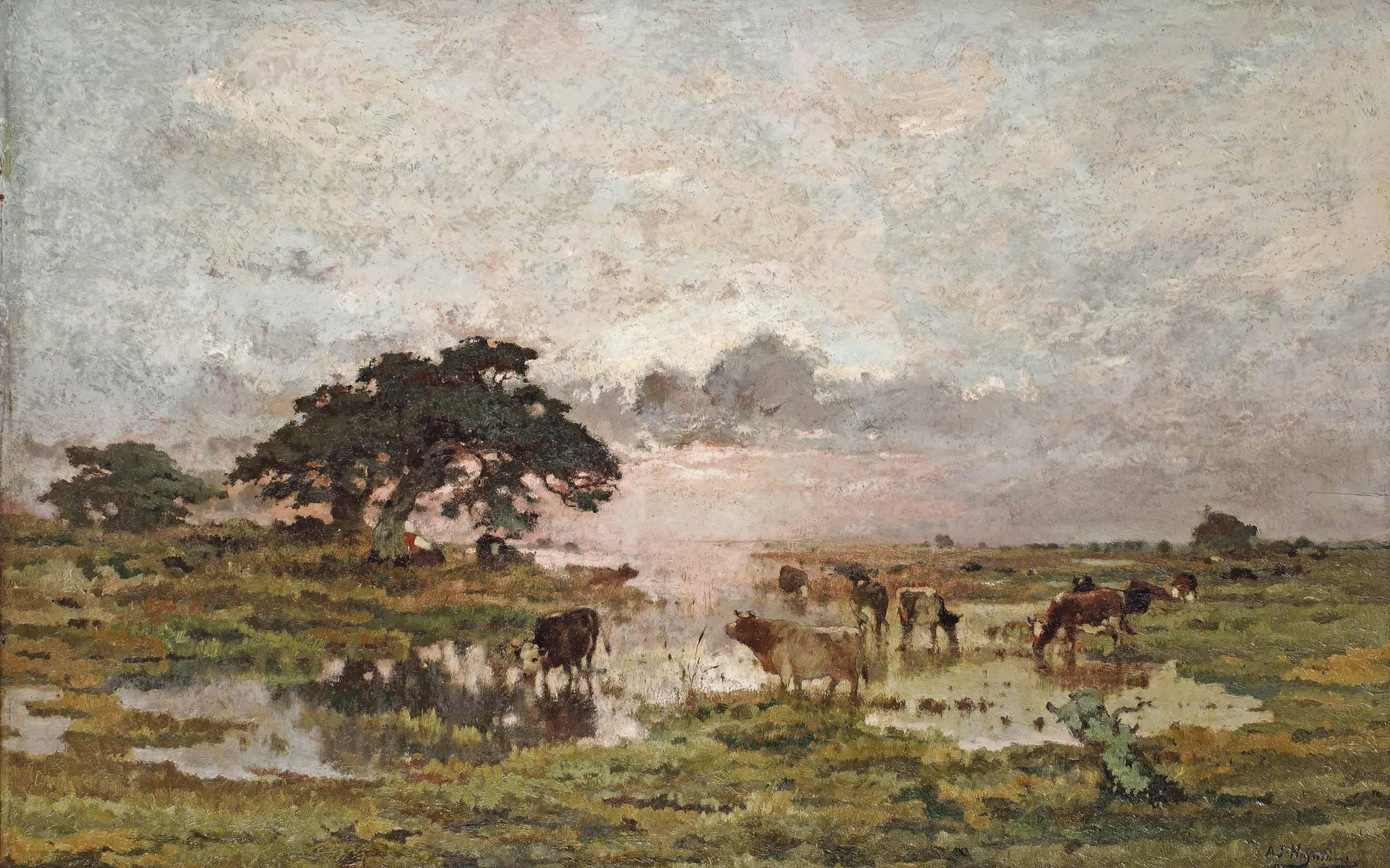 Marais en Campine