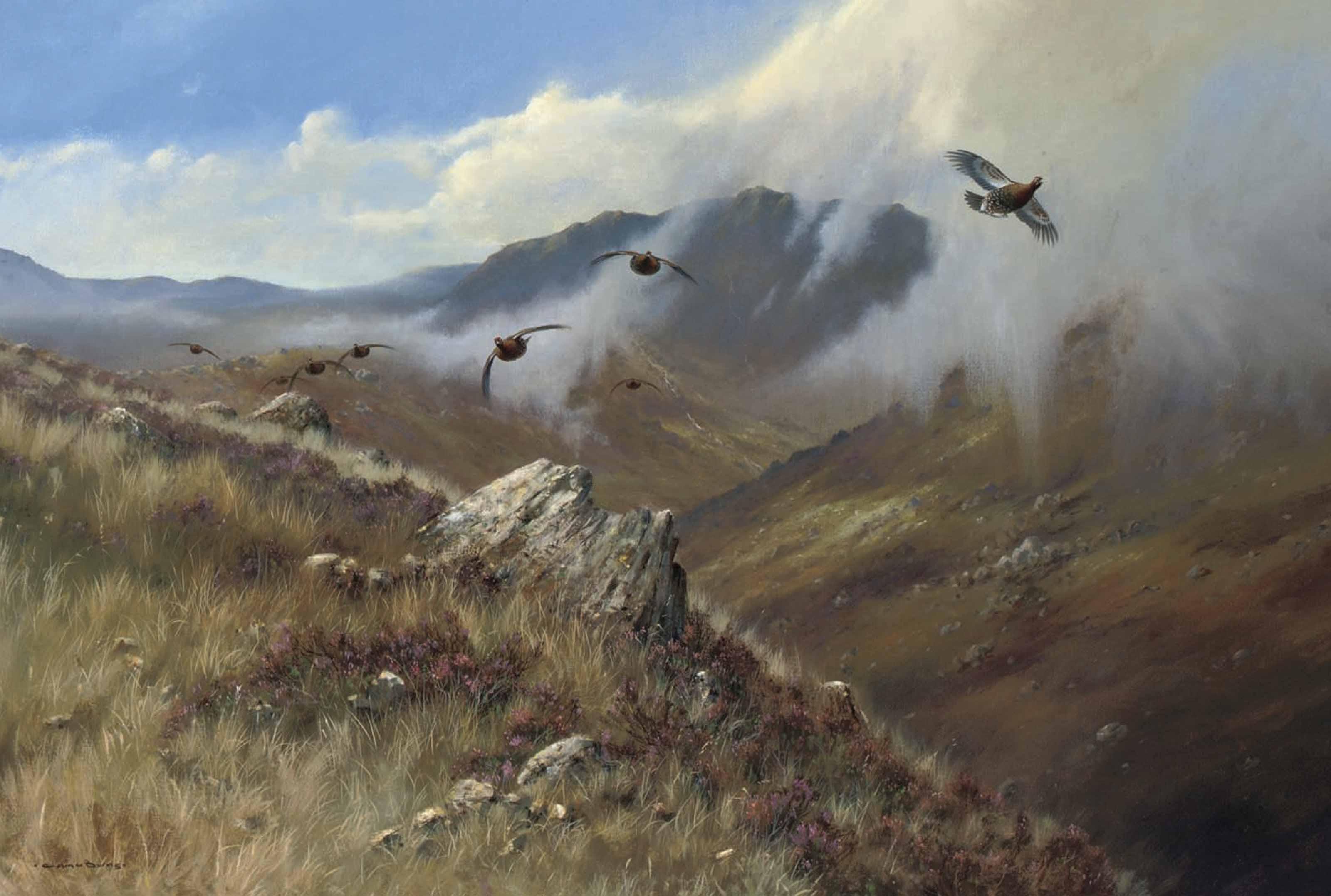 Red grouse, Glen Garry, Invernesshire, Scotland