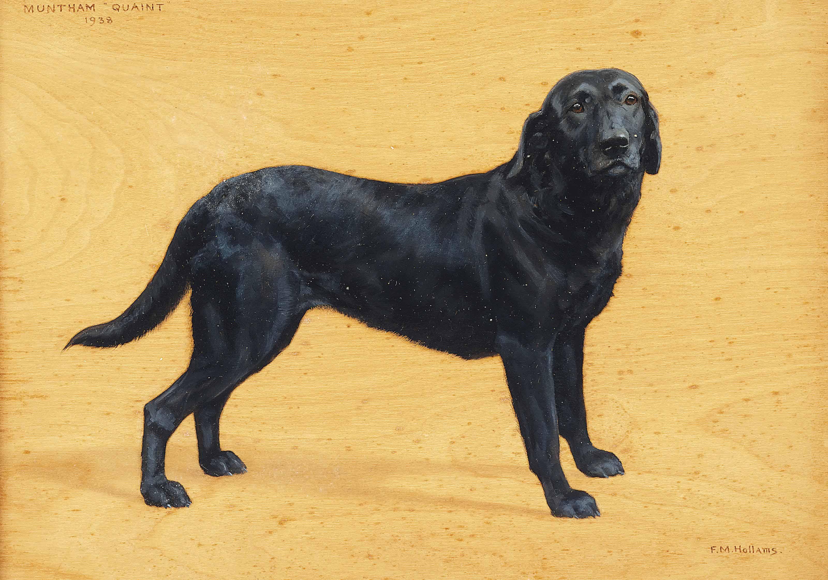Muntham Quaint, a black labrador
