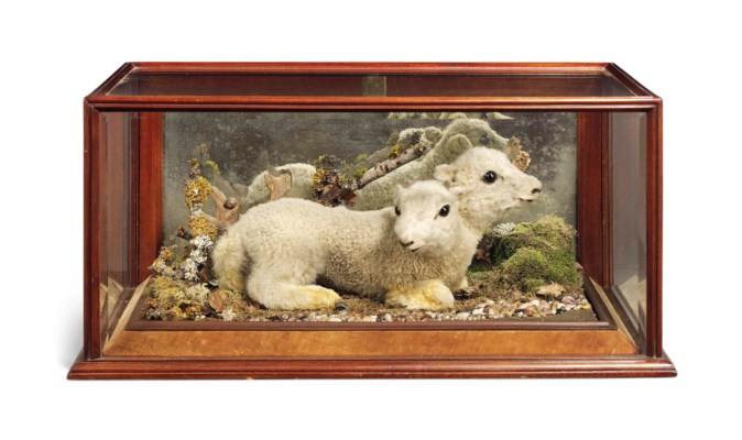 A WELSH TAXIDERMY SPECIMEN OF